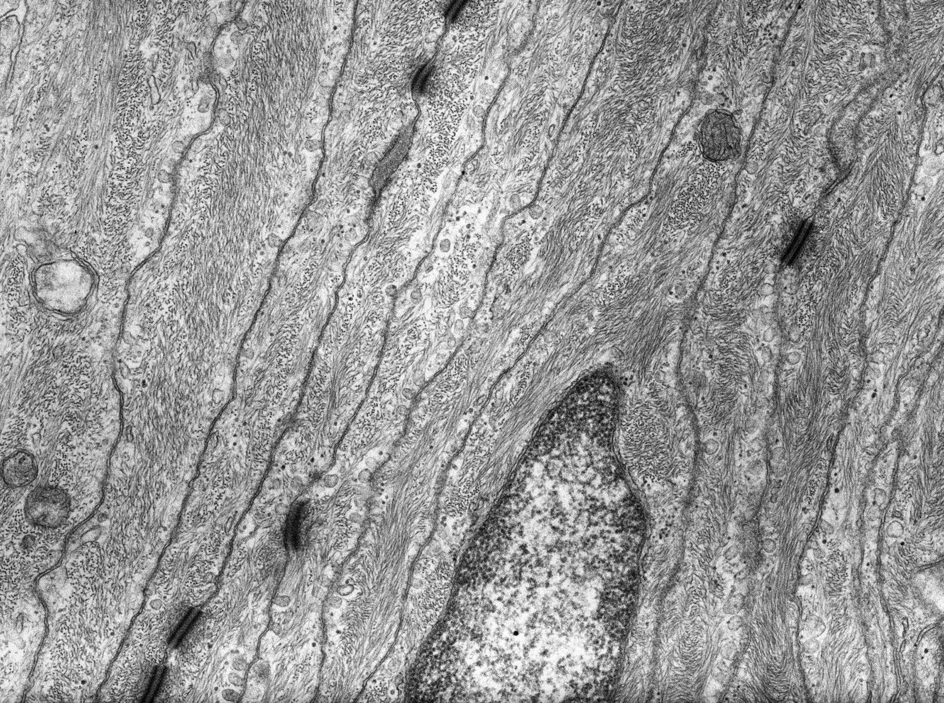 Rana catesbeiana (membrana plasmatica) - CIL:10052