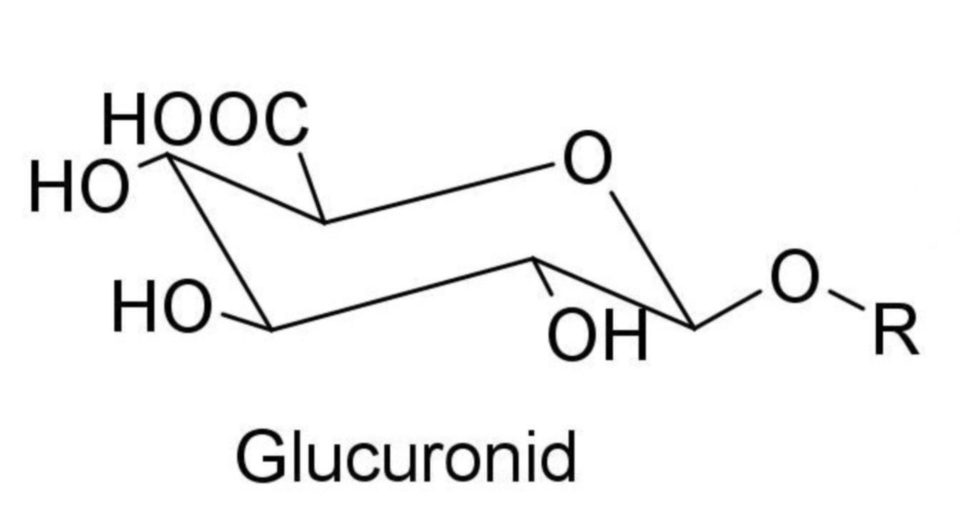 Glucuronid