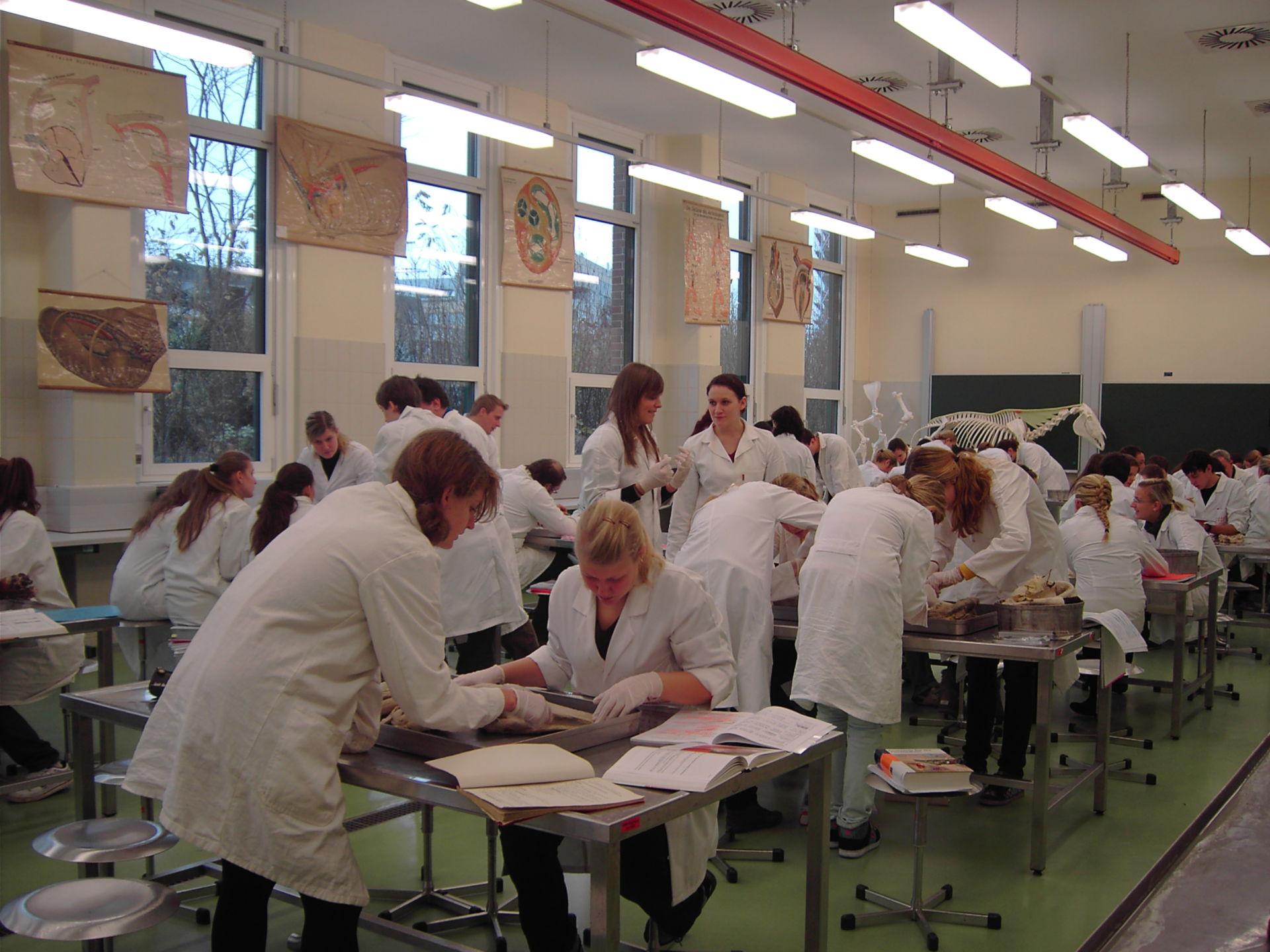 Gross anatomy class - veterinary medicine