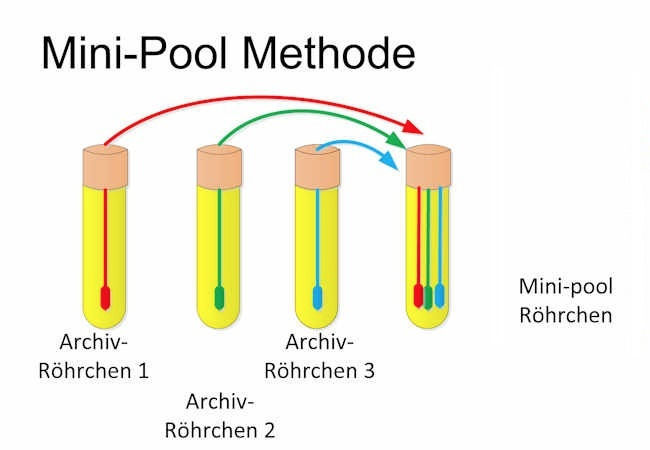 bild_mini_pool_methode_michaelschmidt_or