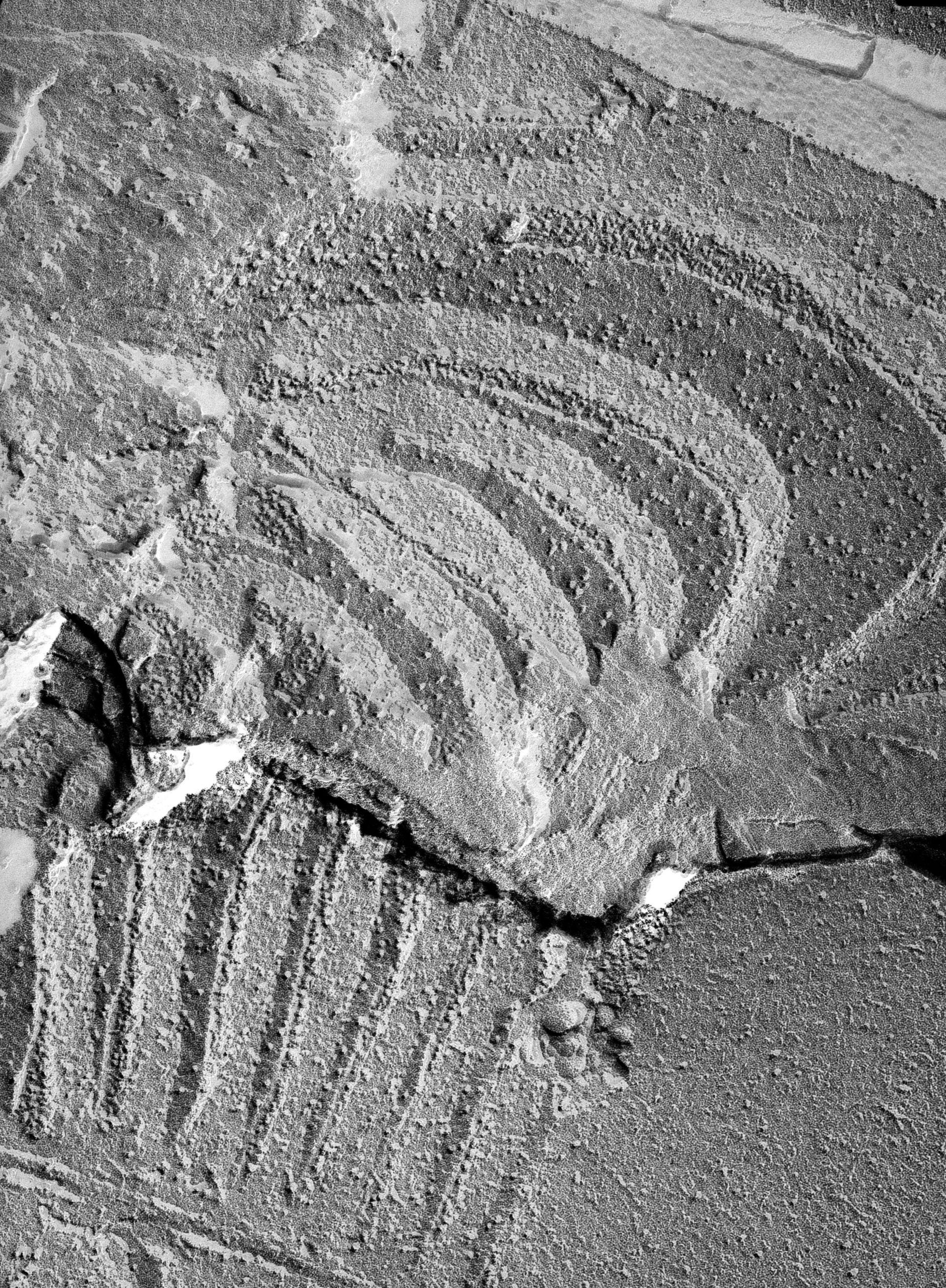 Oscillatoria tenuis (Thylakoid) - CIL:14652