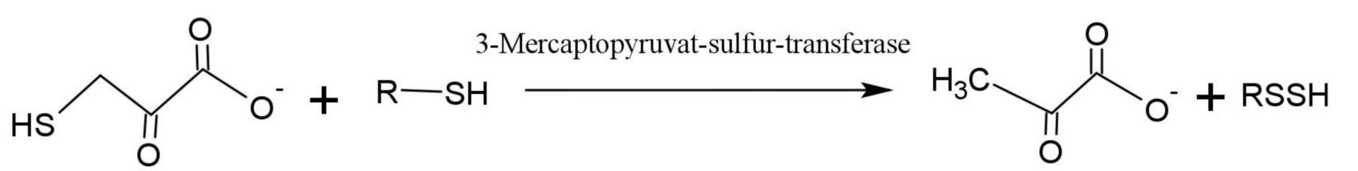 Mercaptopyruvat-Sulfur-Transferase
