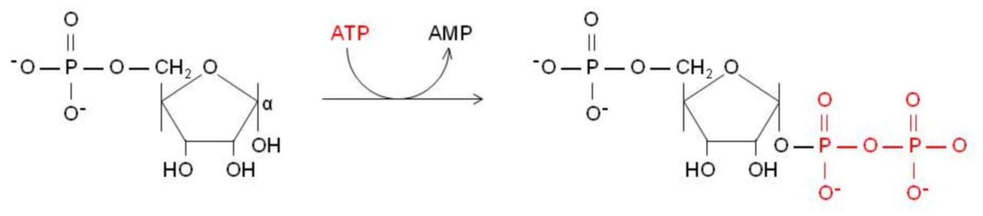 Activación de fosfato de ribosa-5 a frpf