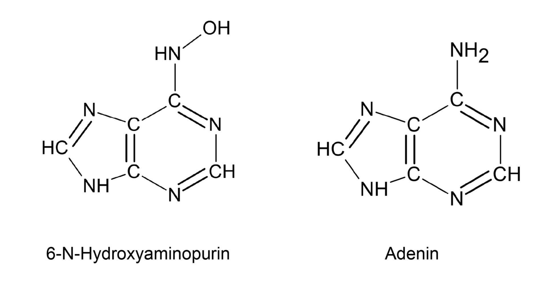 6-N-Hydroxyaminopurin