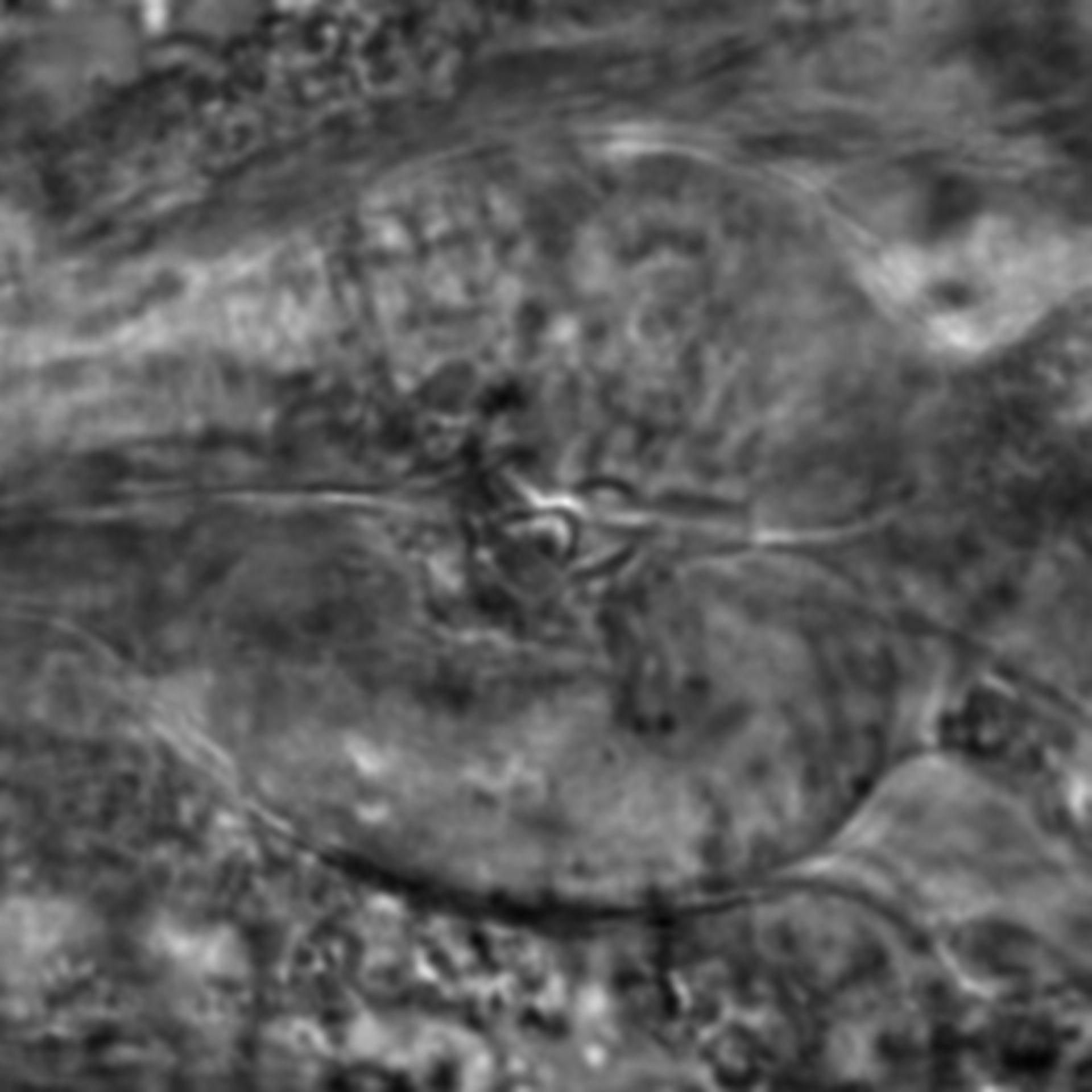 Caenorhabditis elegans - CIL:2138