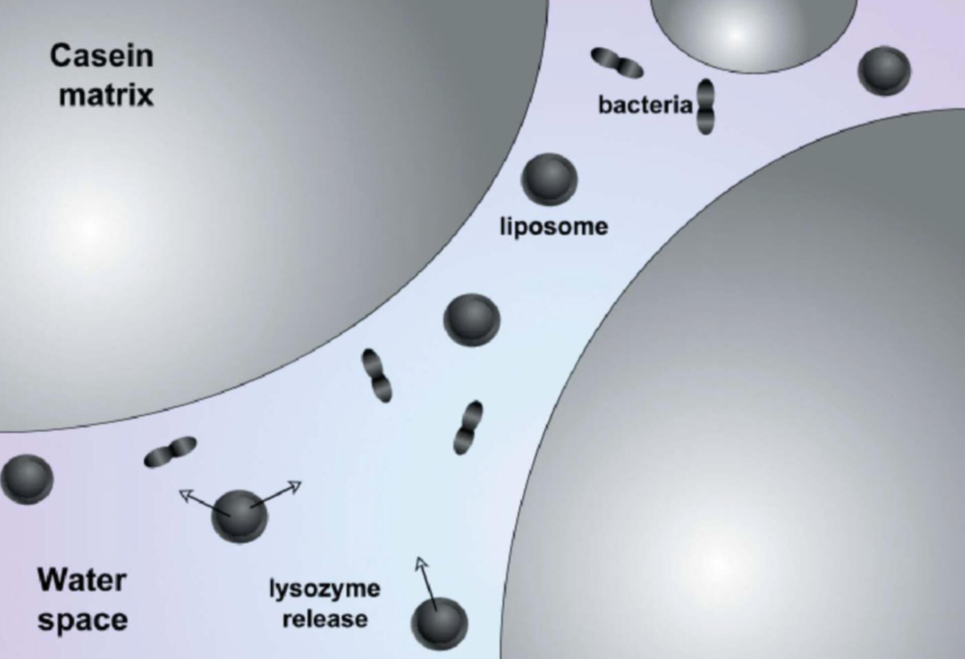 Liposome in Food Industry