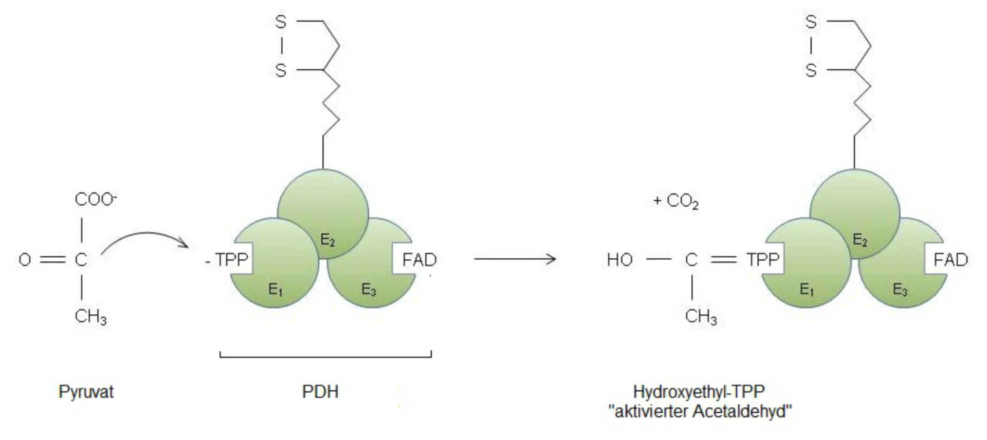 Formación de hidroxietil