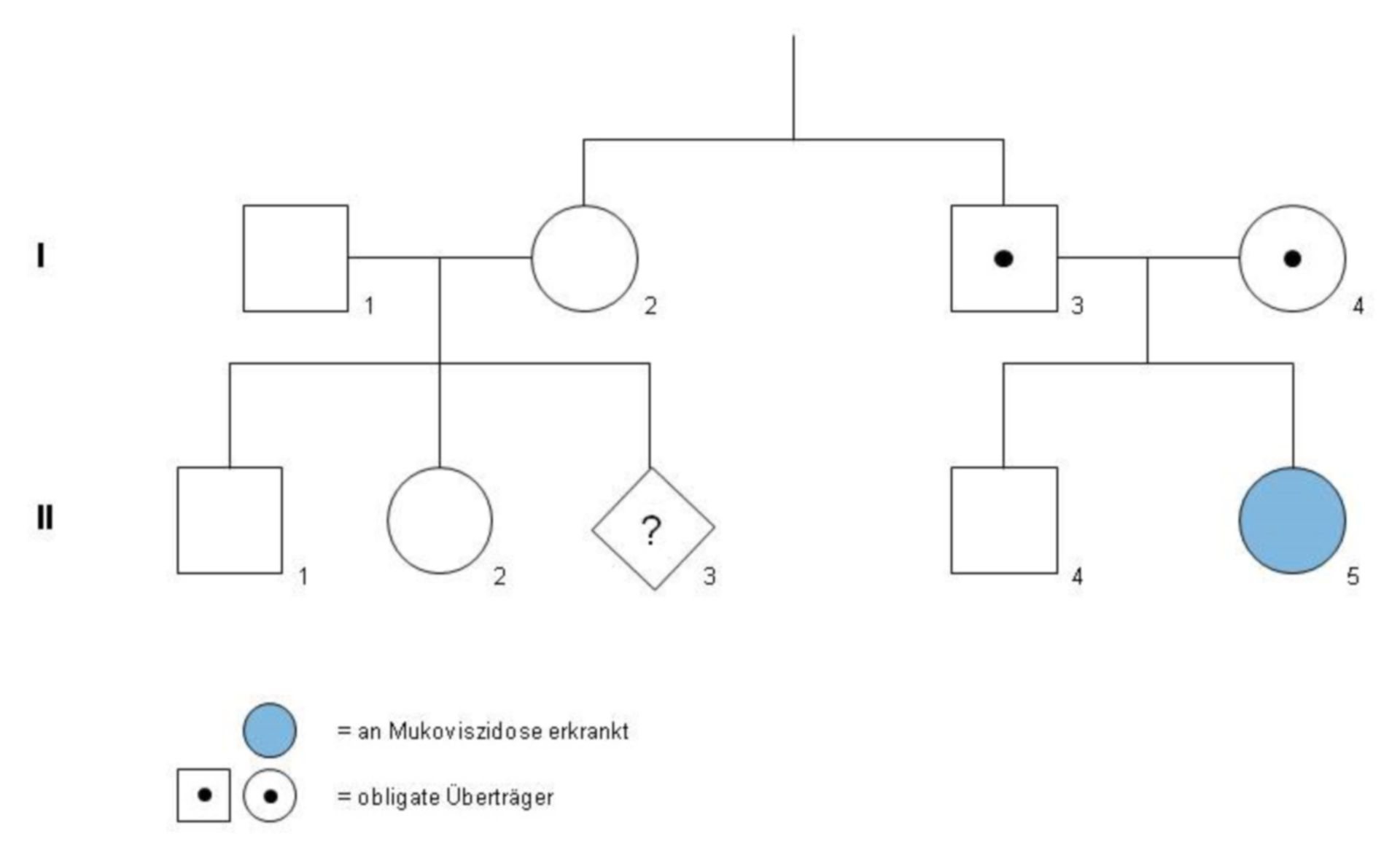 Genealogical tree (example of the Maier family)