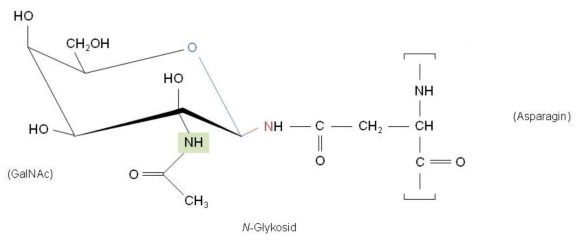 N-Glykosid