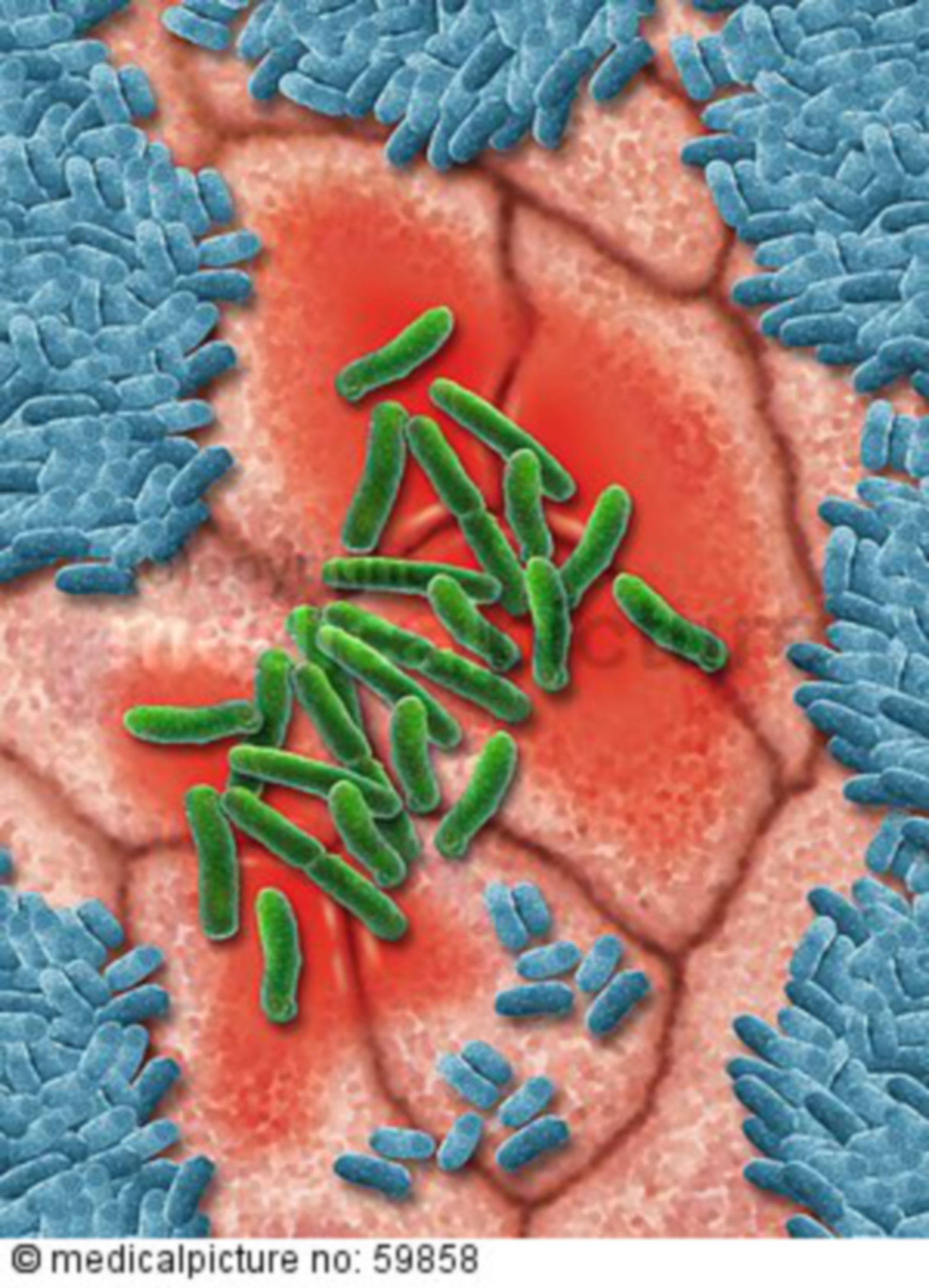 EHEC-Bakterium