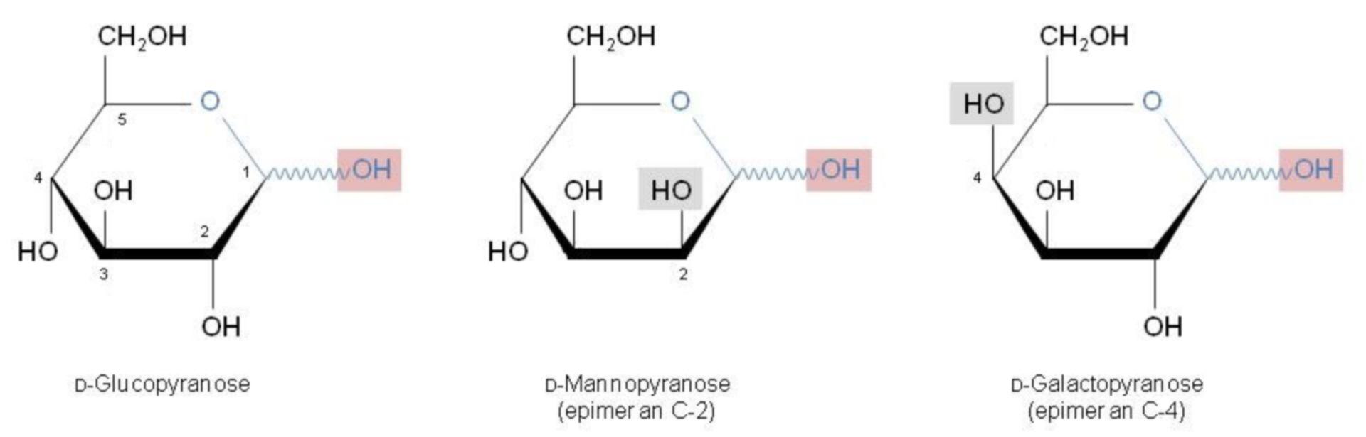 Epimere Zucker - Haworth-Formel