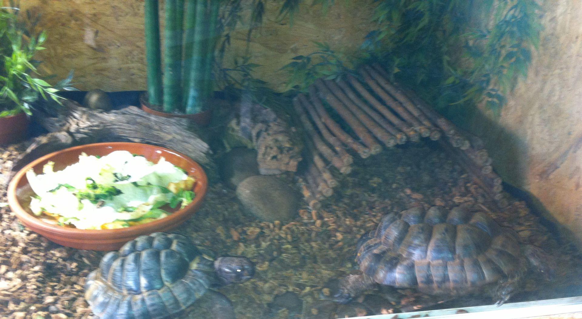 Terrarium für Landschildkröten - Deformierter Panzer