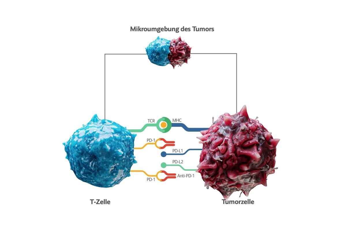 mikroumgebung_des_tumors_original.jpg