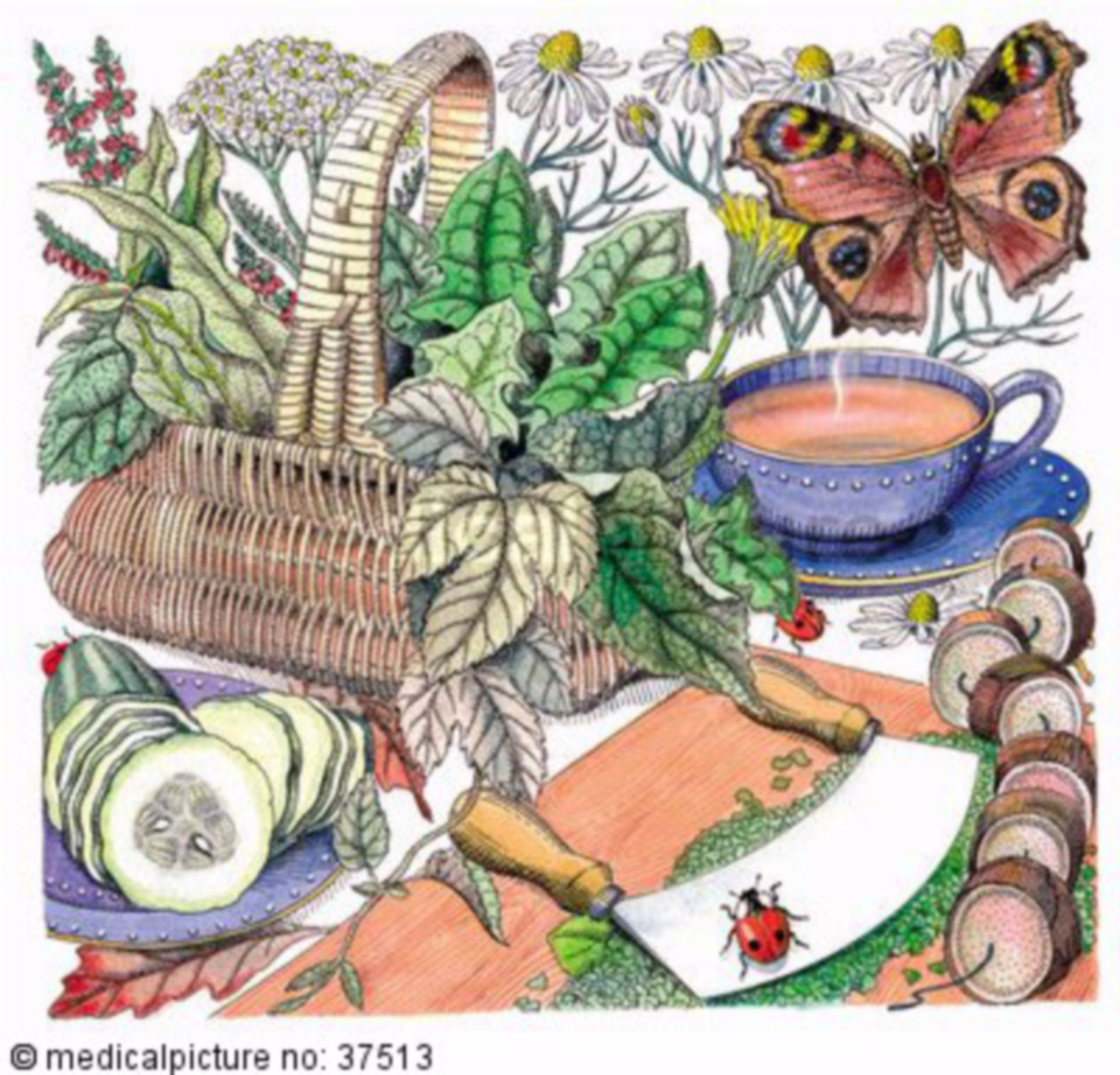 Kräuter, Pilze und Beeren