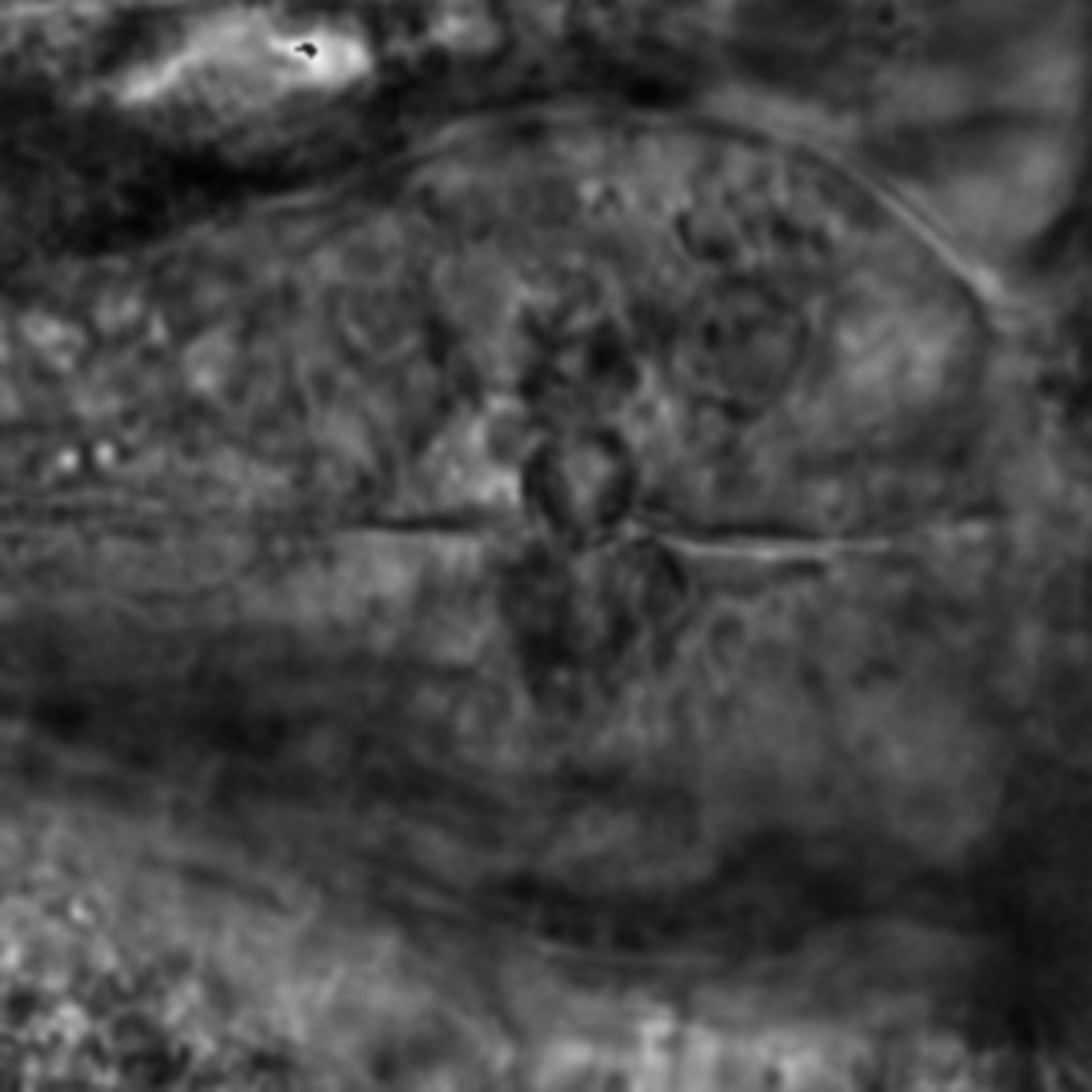 Caenorhabditis elegans - CIL:2707