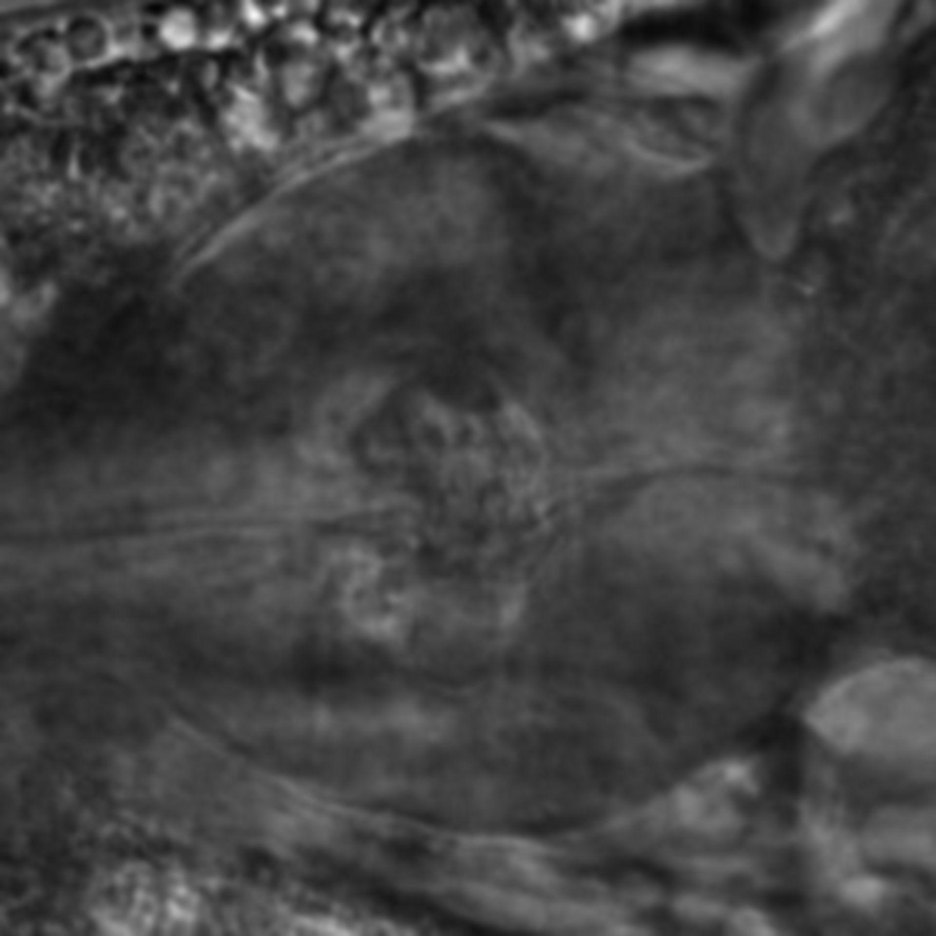 Caenorhabditis elegans - CIL:2266