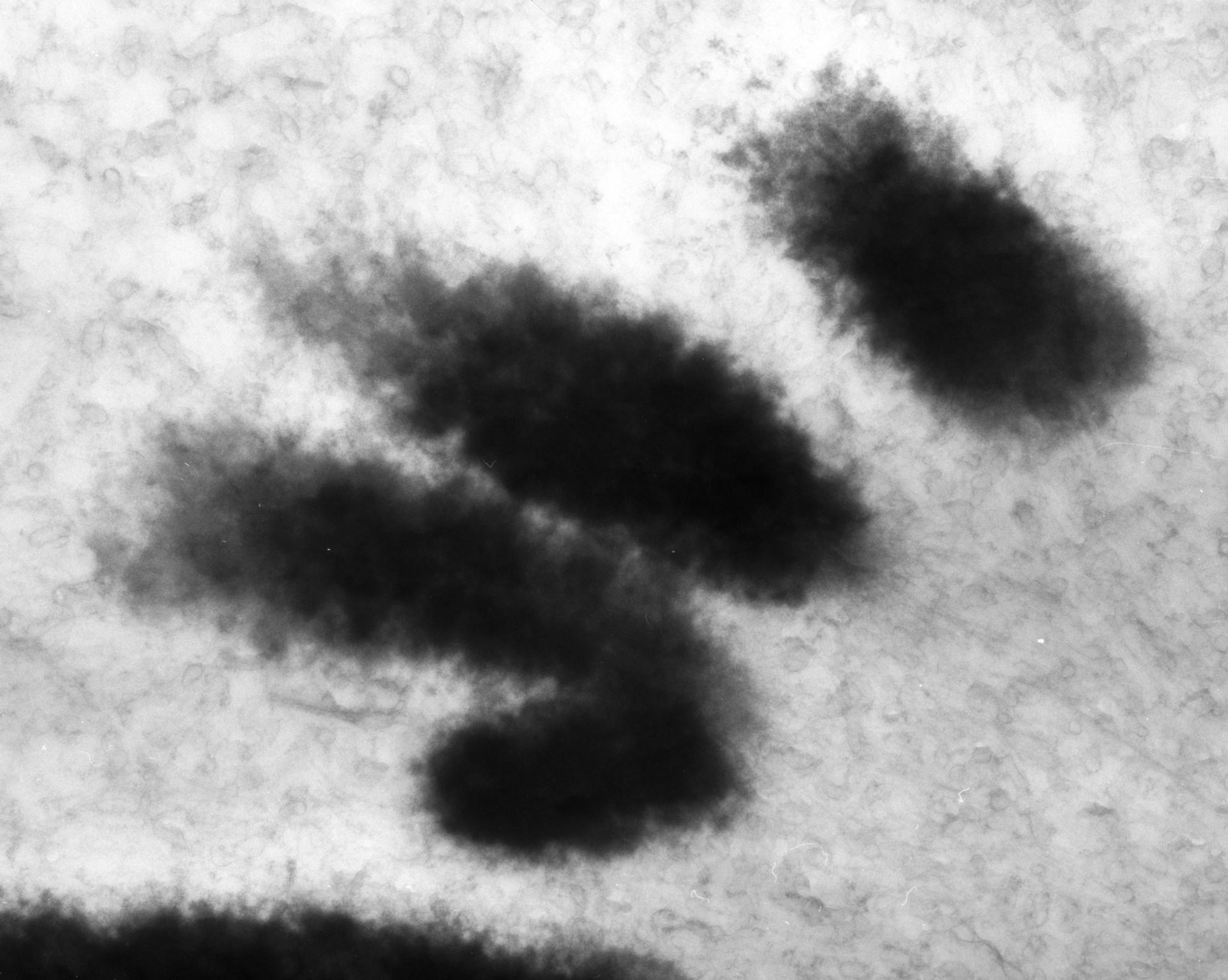 Haemanthus katharinae (Nuclear chromosome) - CIL:11909