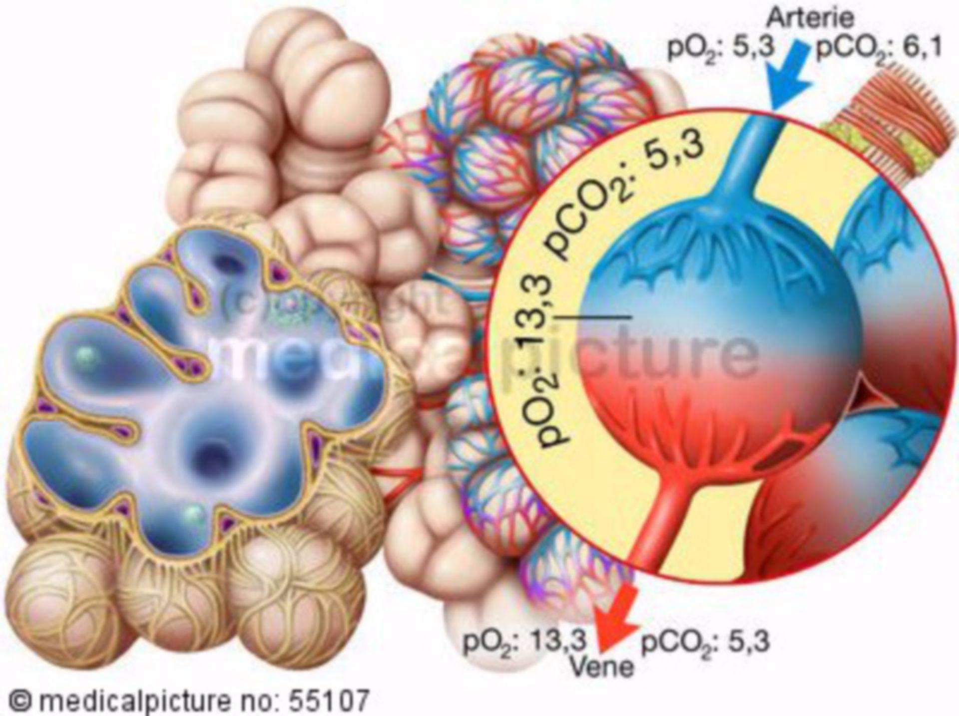 Alveolar partial pressure