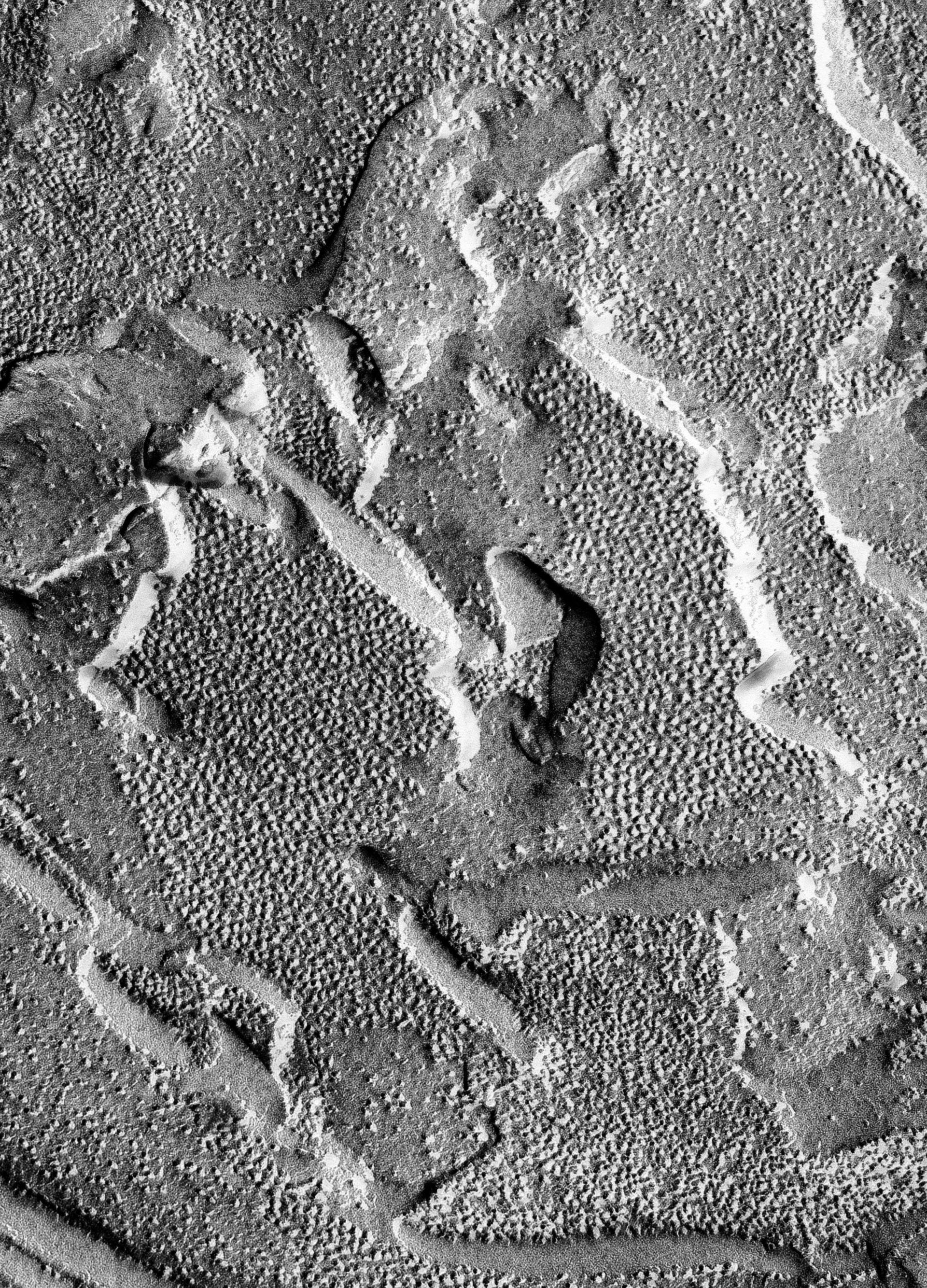 Prochloron (Thylakoid) - CIL:16473