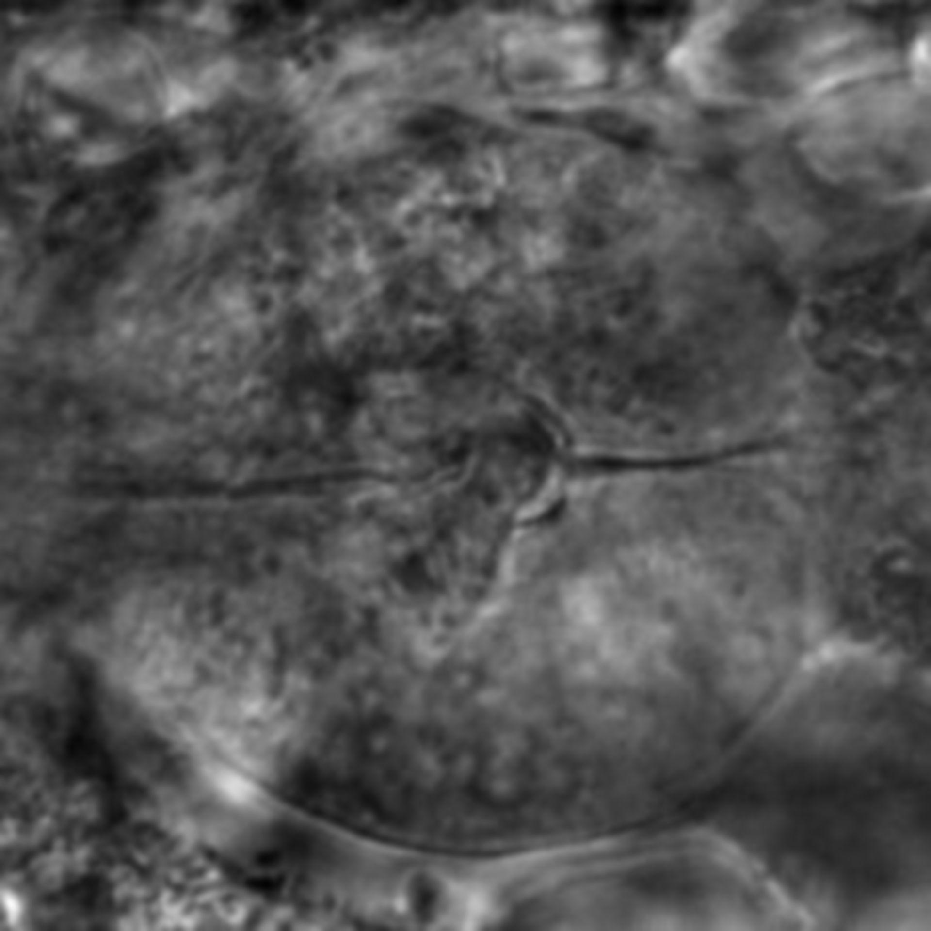Caenorhabditis elegans - CIL:2270
