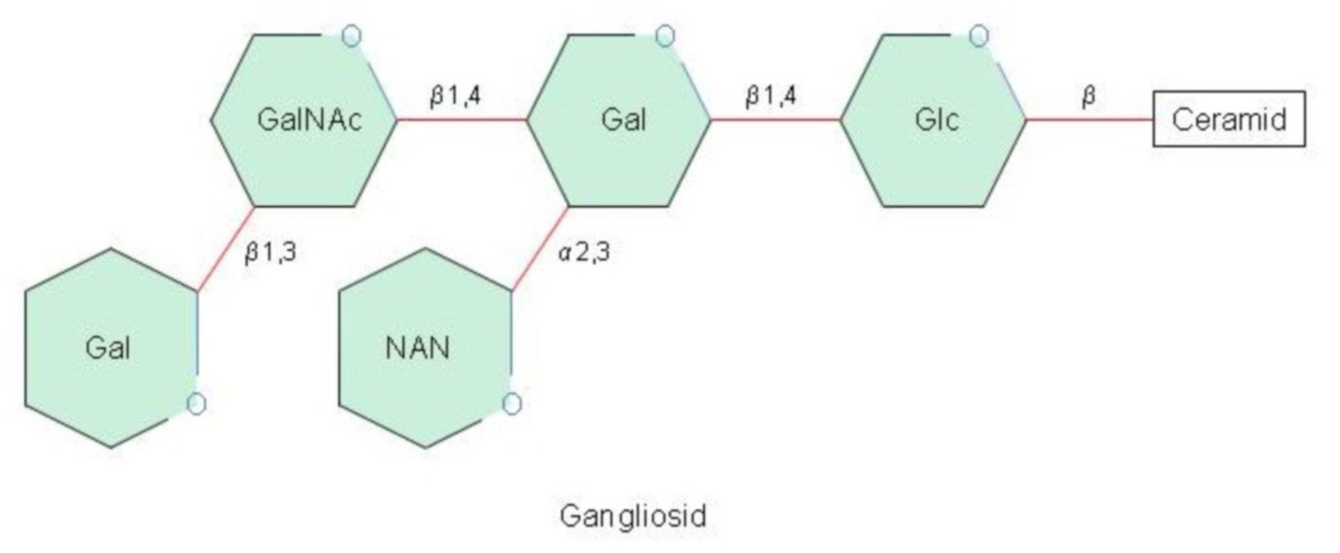 Gangliosid