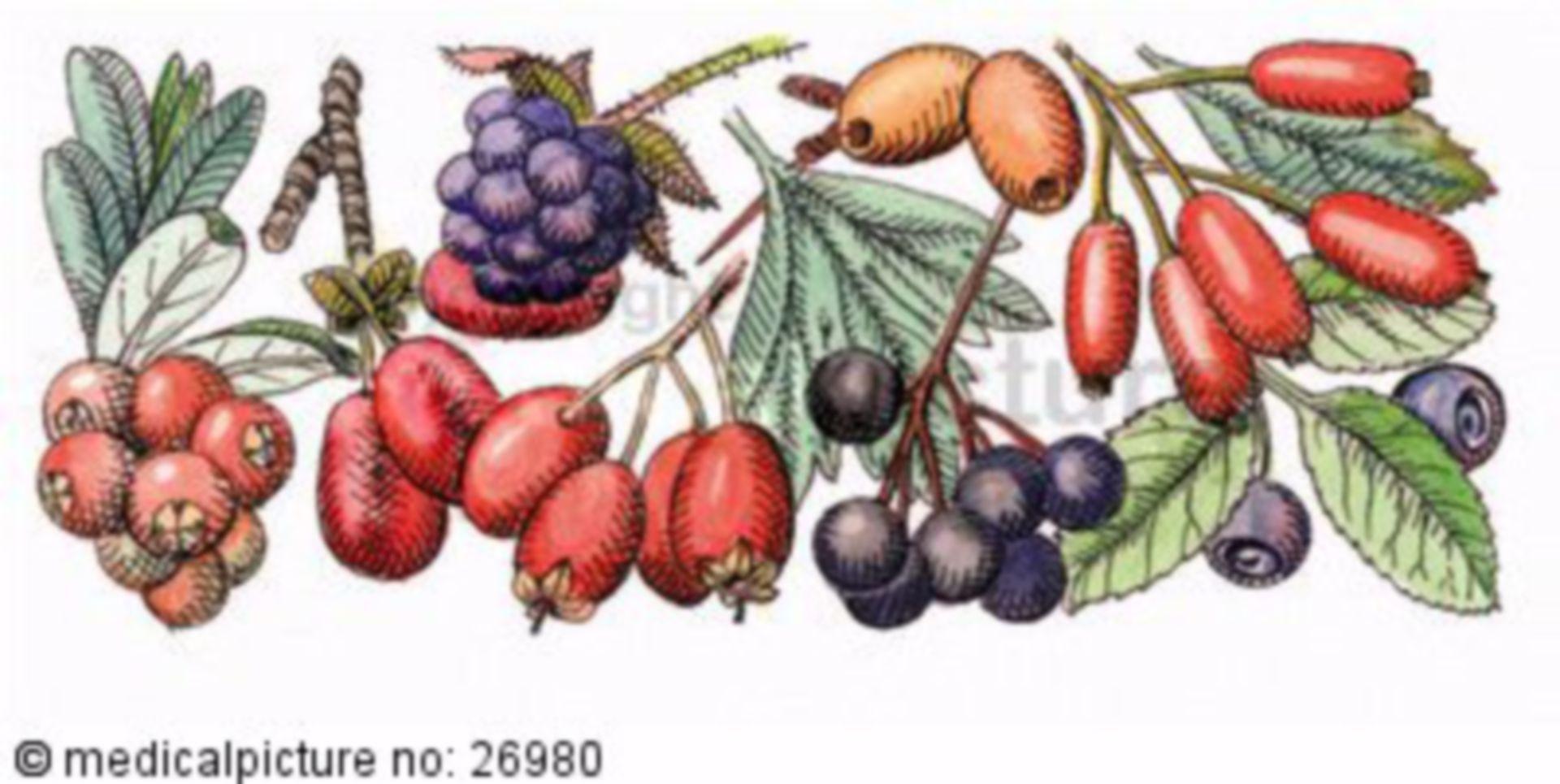 Verschiedene Beeren