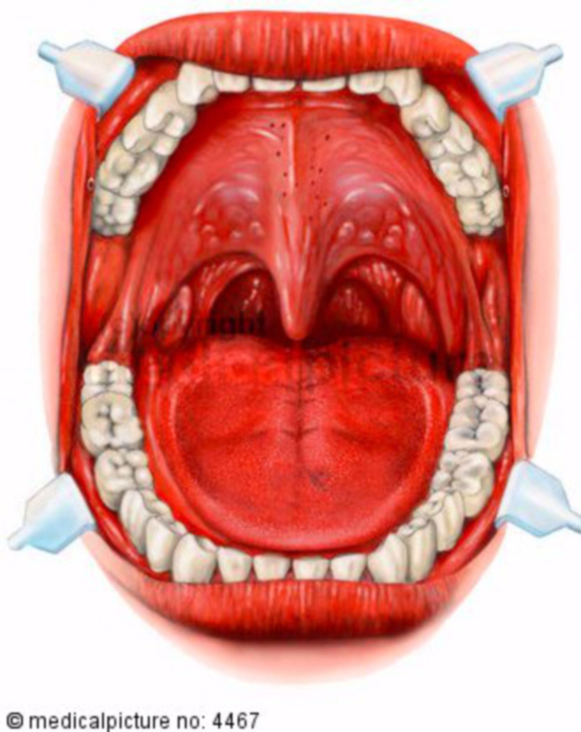 Bocca e gola