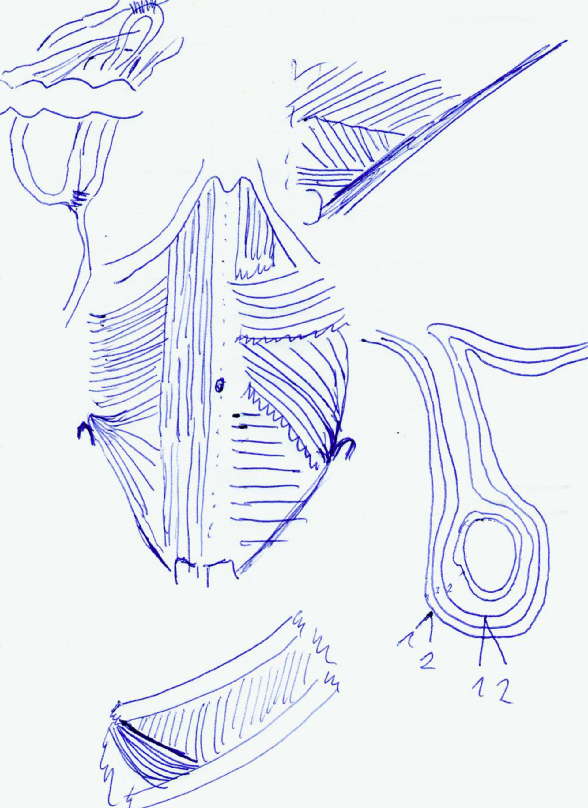 Bauchwand