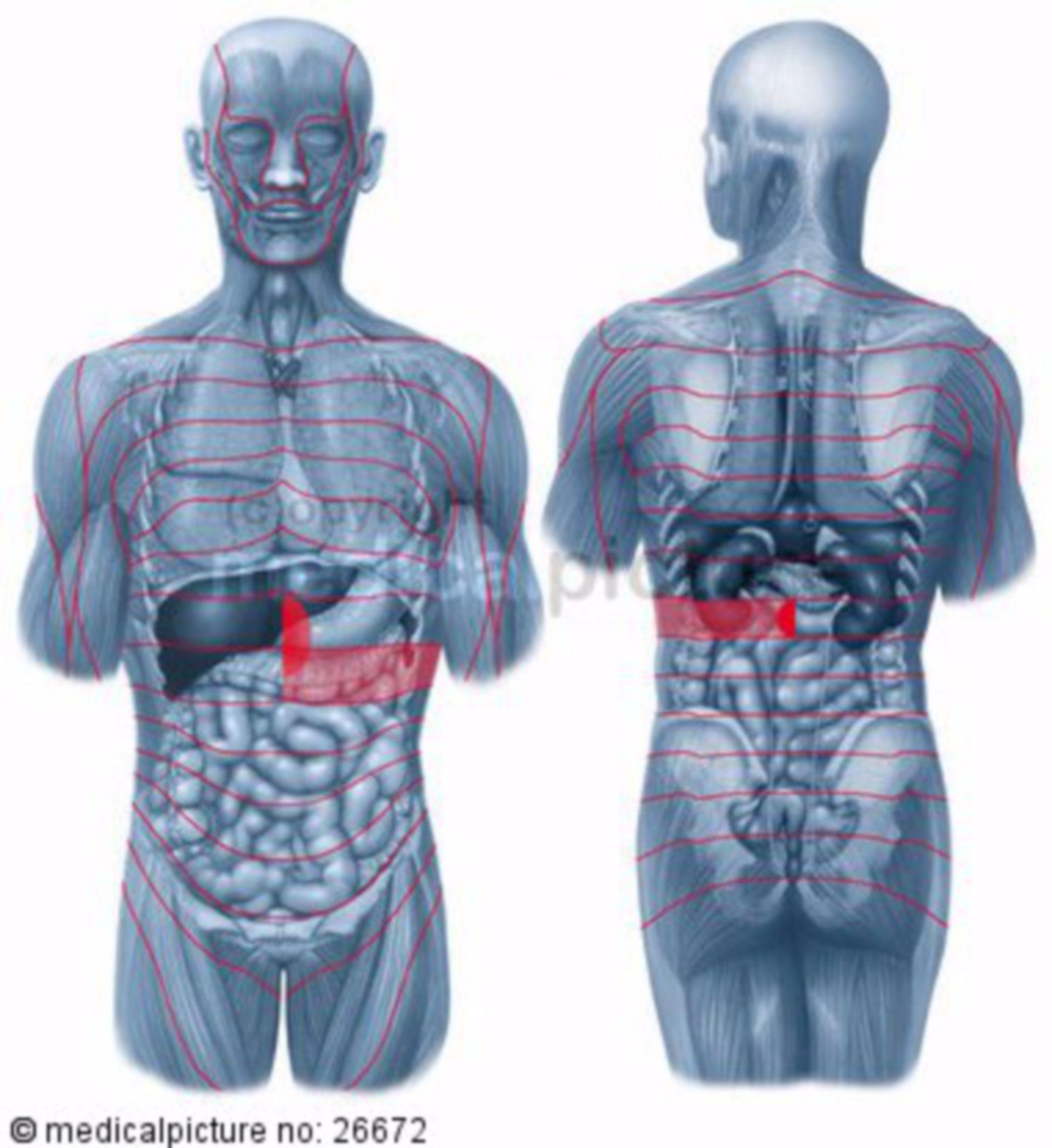 Zone di Head, pancreas