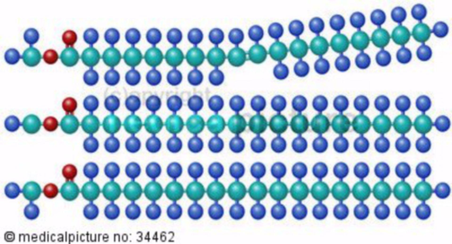 Strukturformel der Triglyzeride
