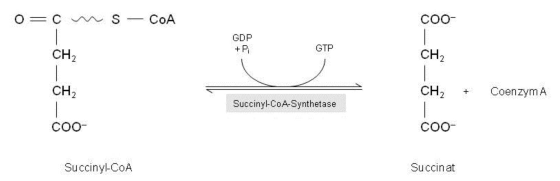 Fosforilación a nivel de substratos - ciclo del ácido cítrico