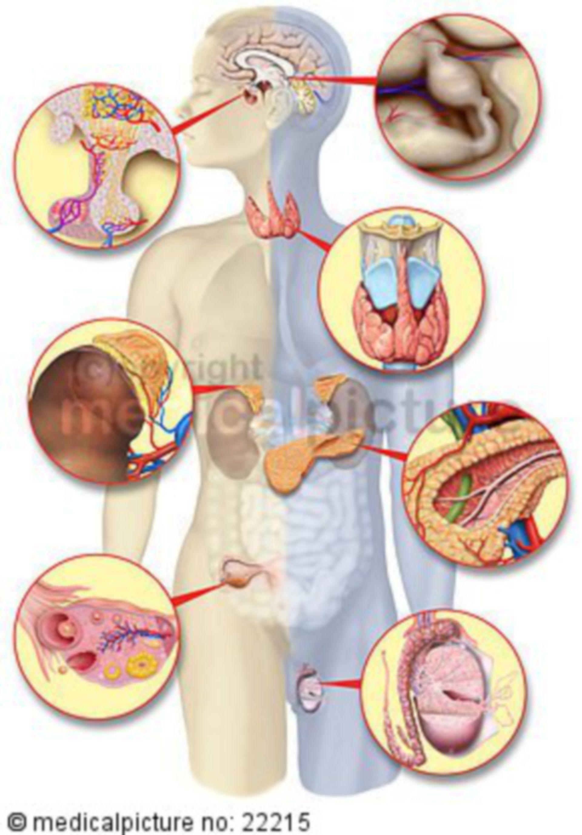 Hormone-producing organs