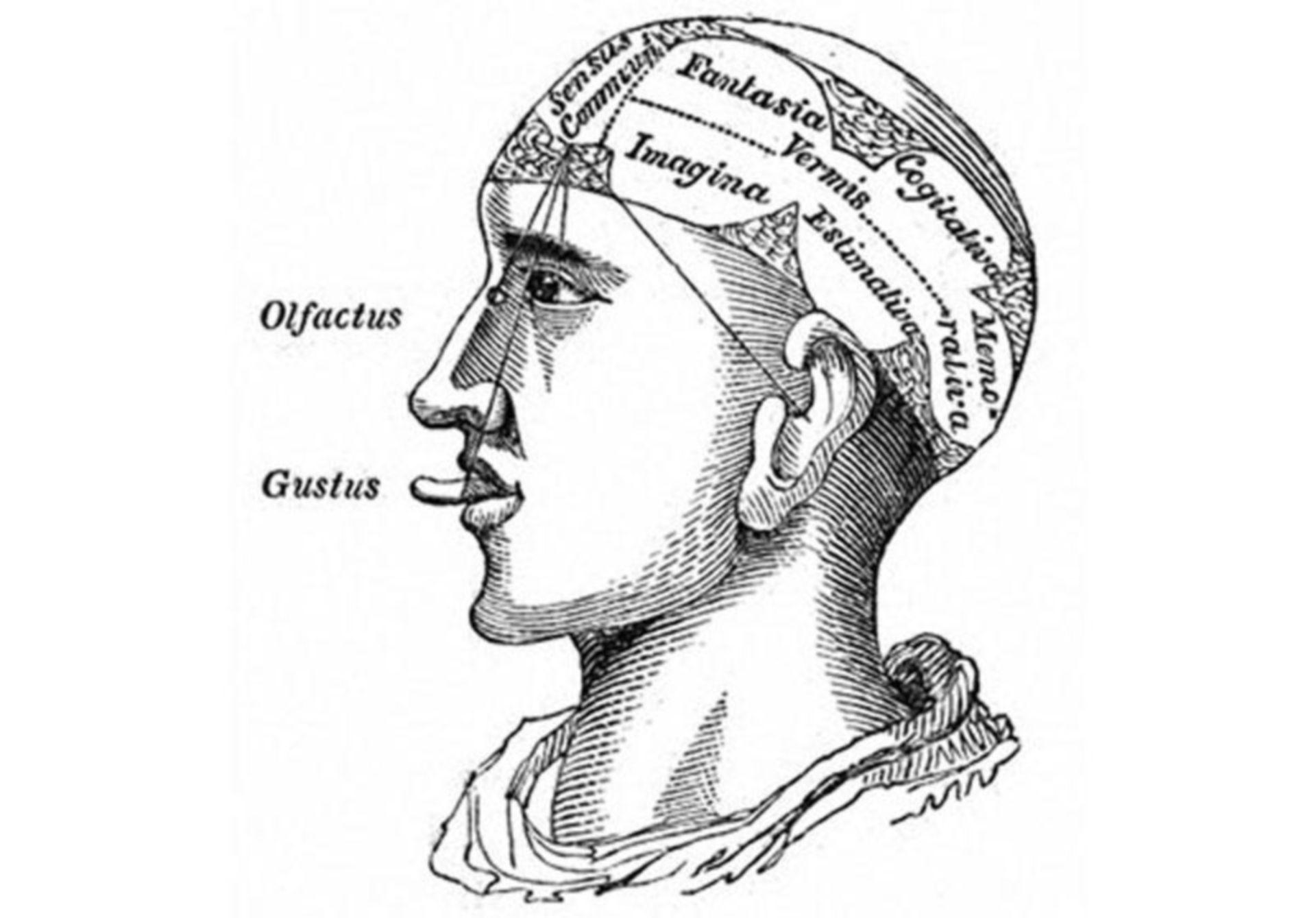 History of neuroscience: Phrenology