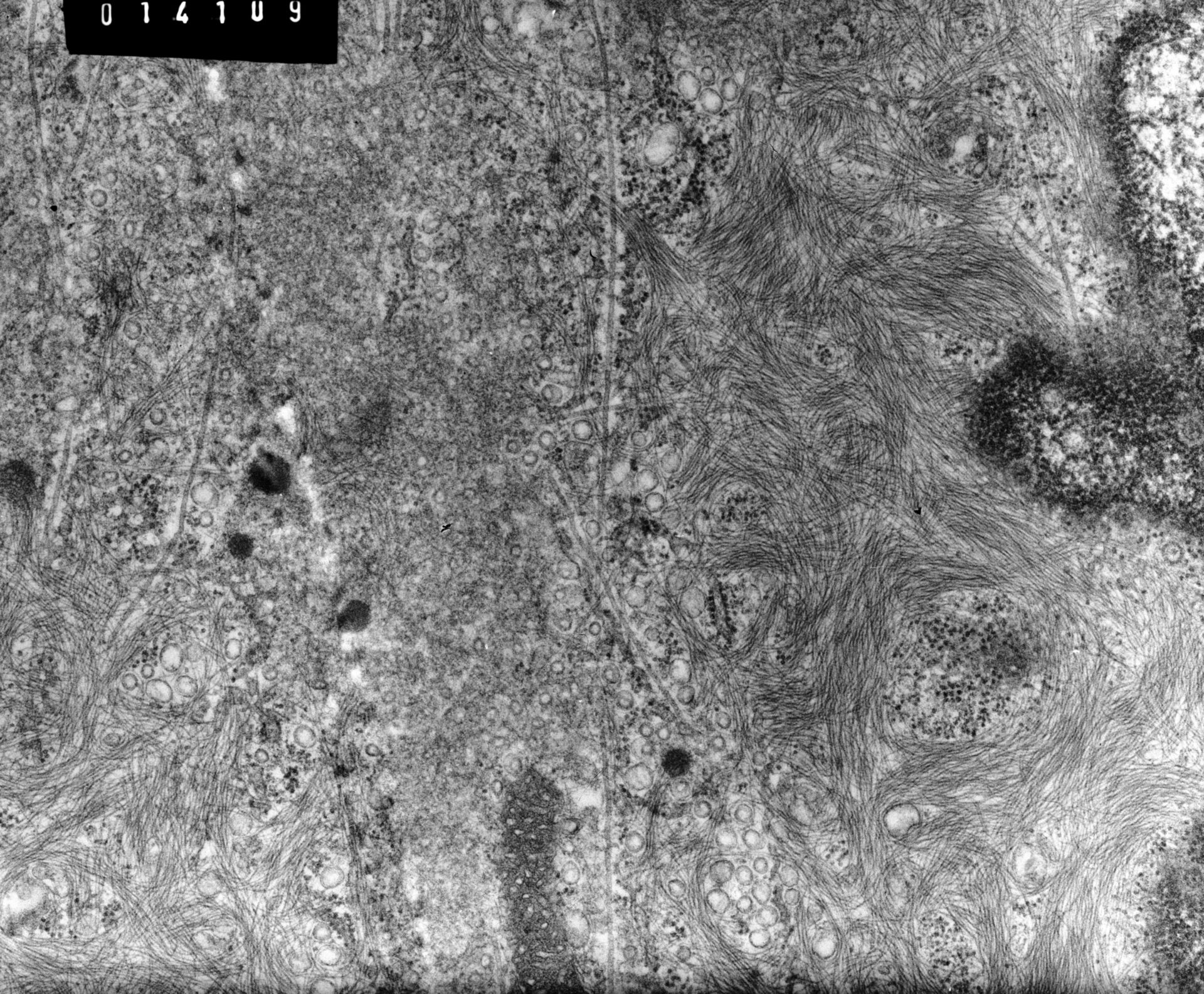 Rana catesbeiana (Plasma membrane) - CIL:10002