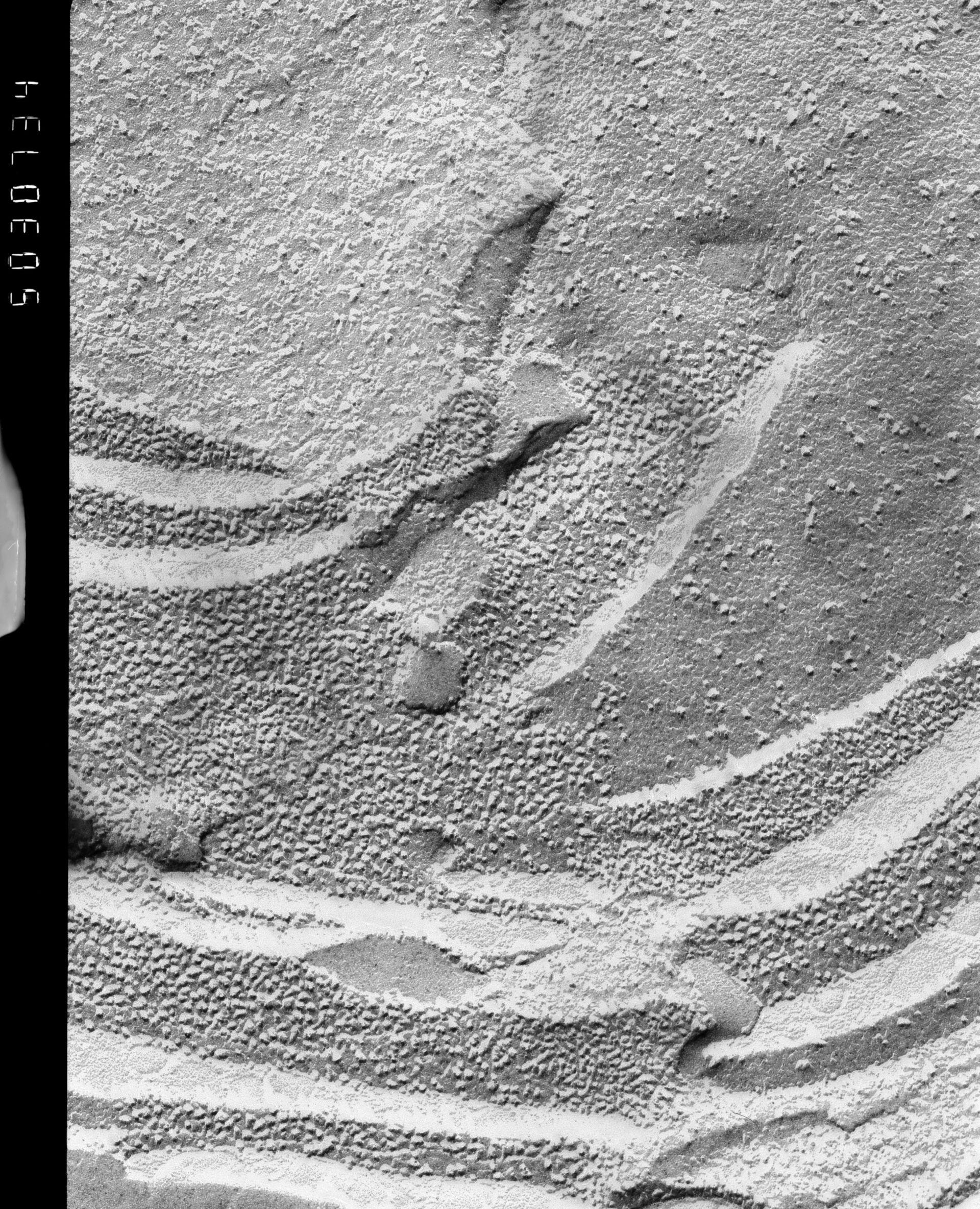 Prochloron (Thylakoid) - CIL:13858
