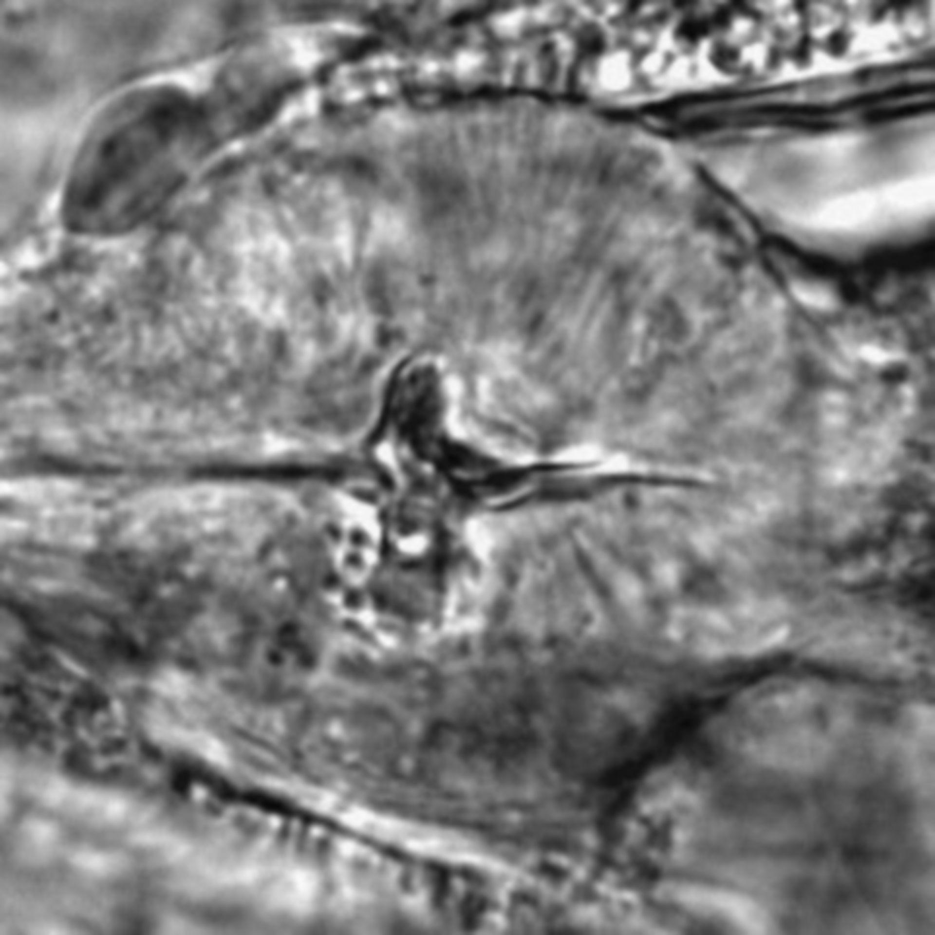 Caenorhabditis elegans - CIL:1939