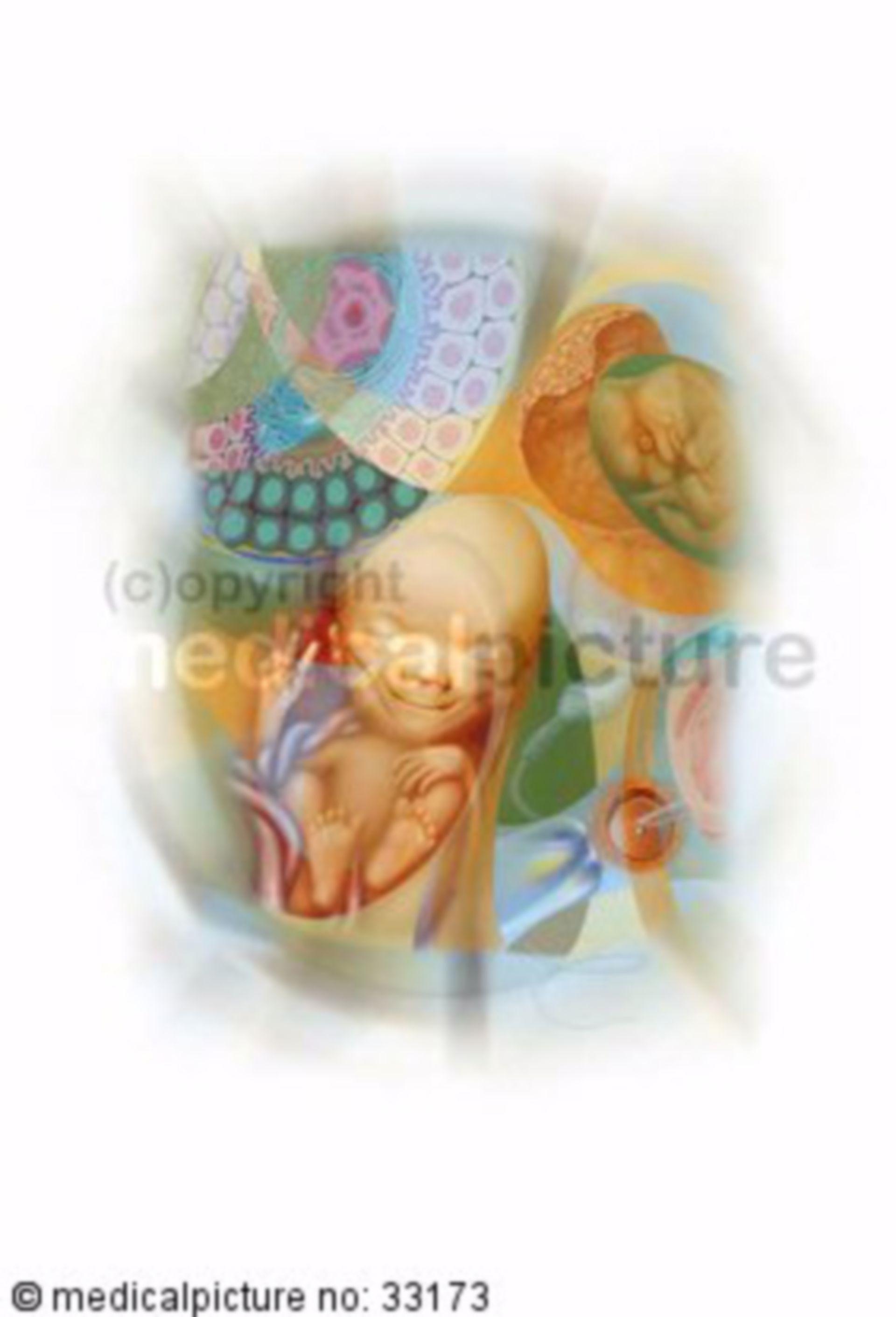 Menschlicher Fetus