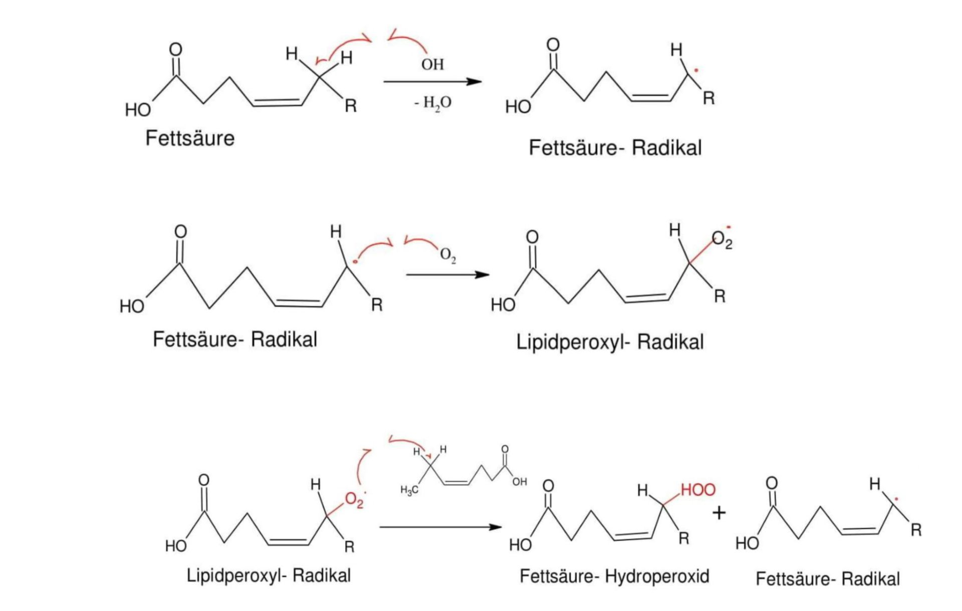 Fettsäure Peroxidation-11