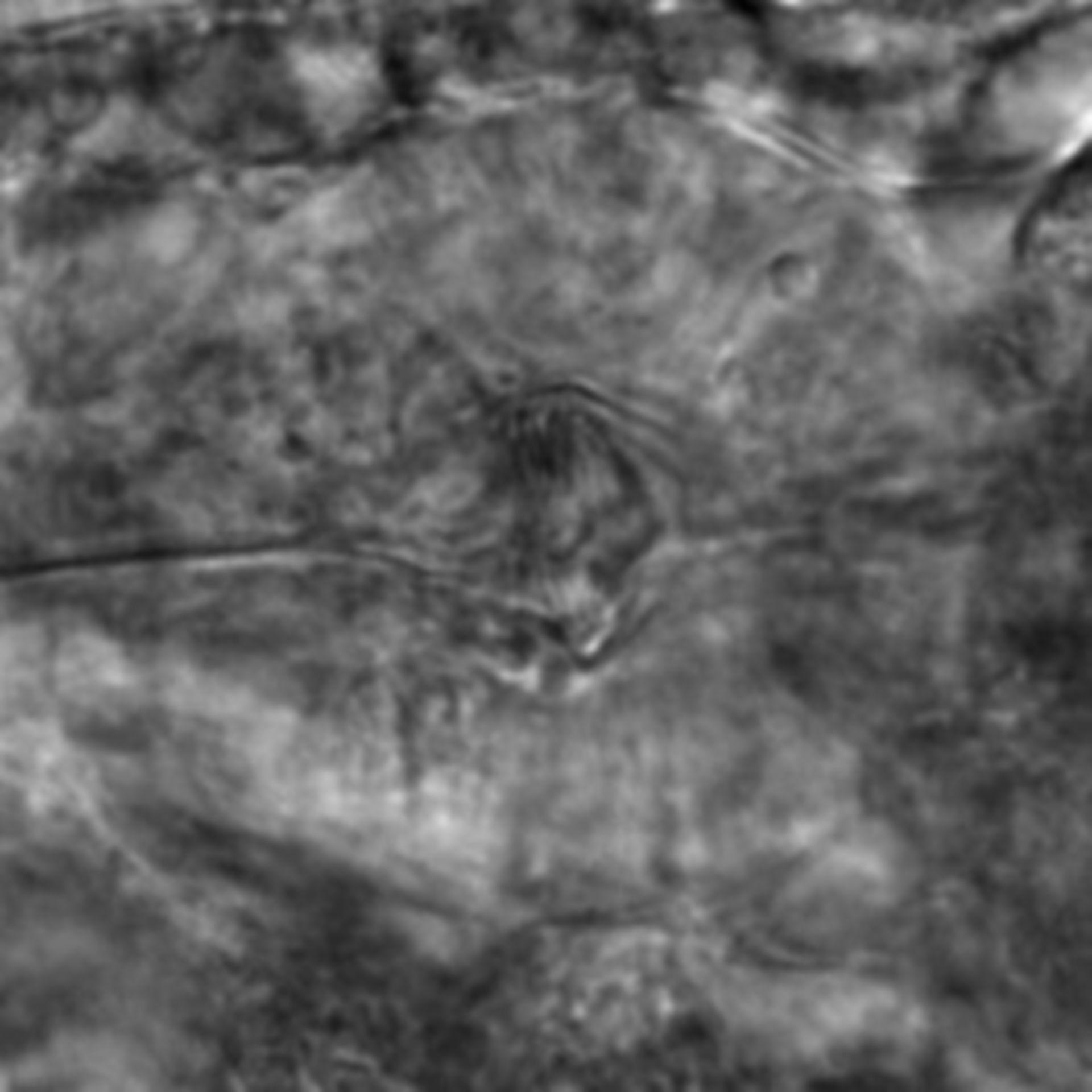 Caenorhabditis elegans - CIL:2248