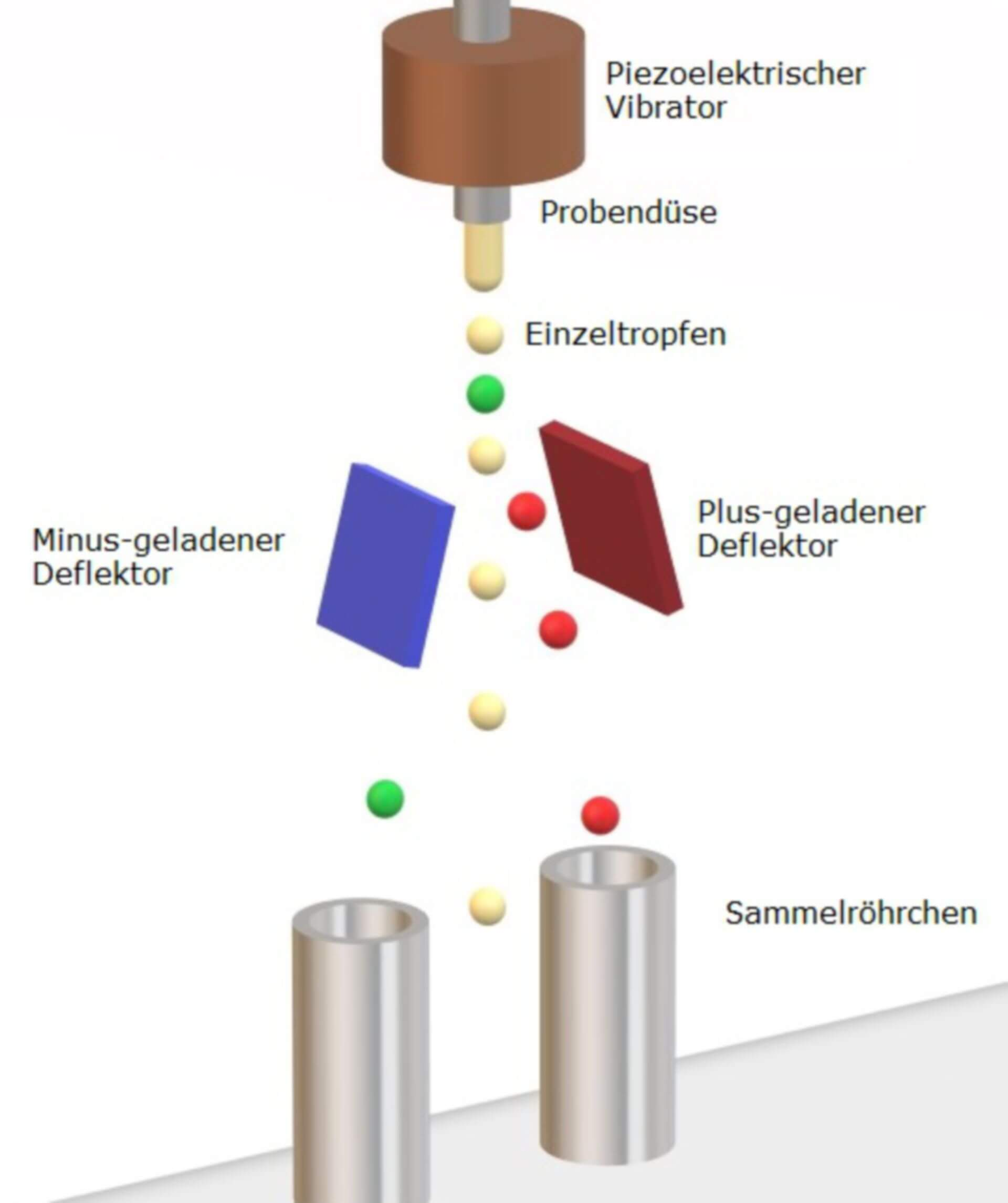 Fluorescence Activated Cell Sorting (Schema)