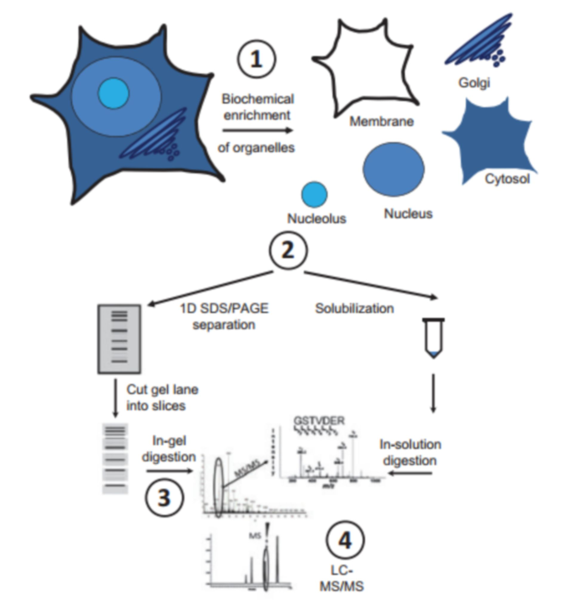 Label free proteomics