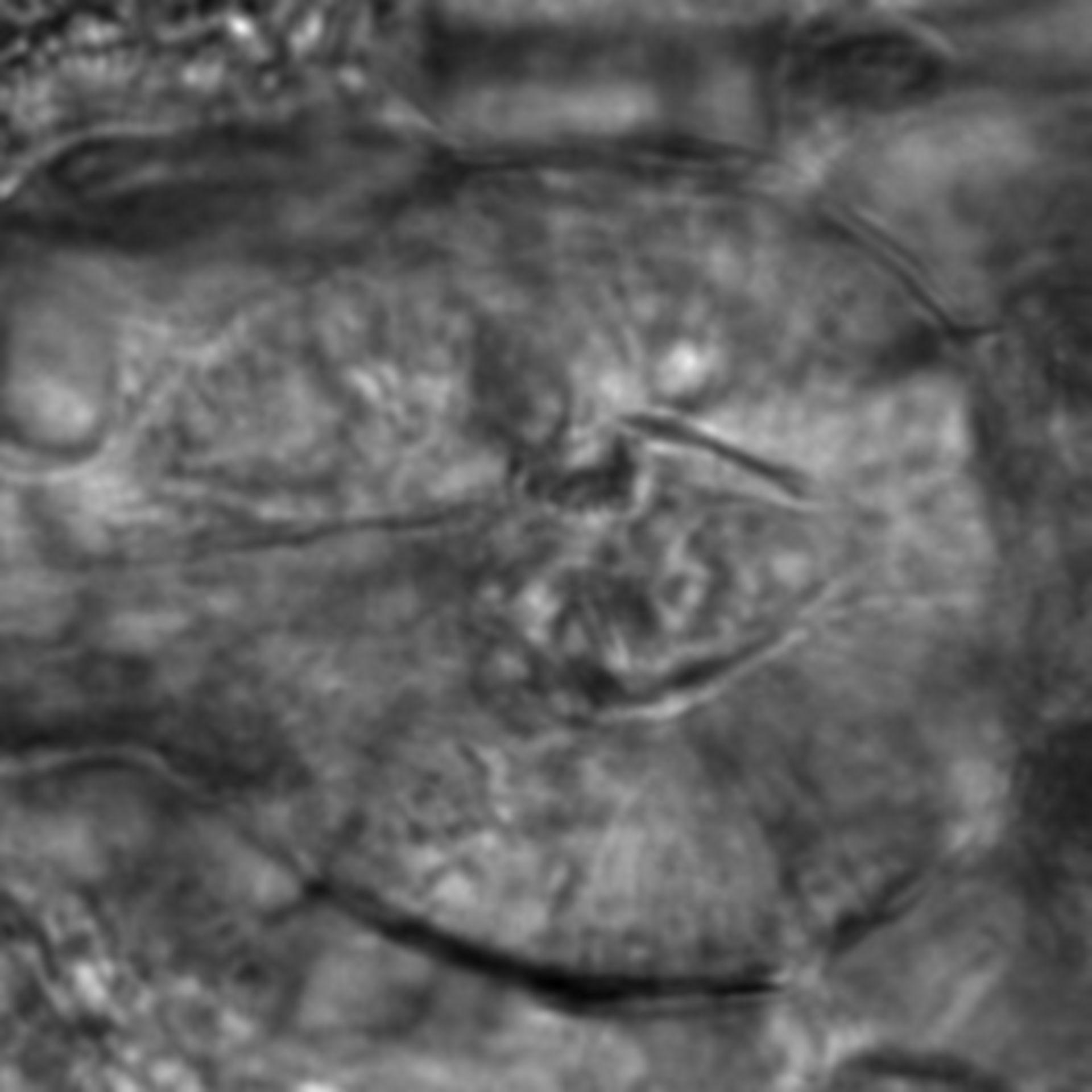 Caenorhabditis elegans - CIL:2842