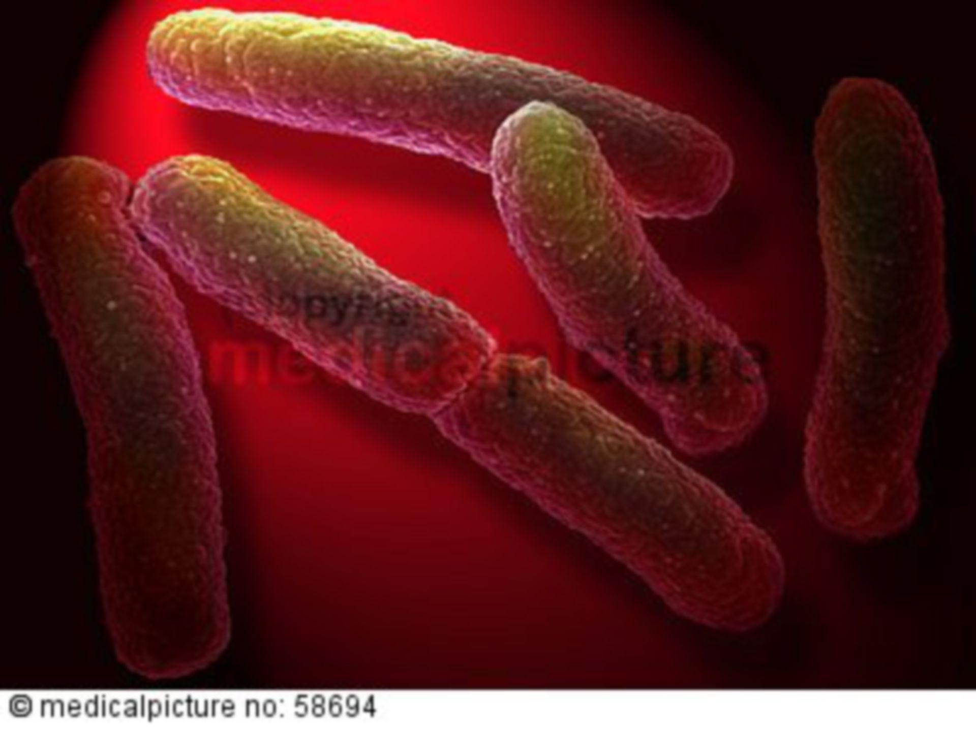 NDM 1-Bakterium