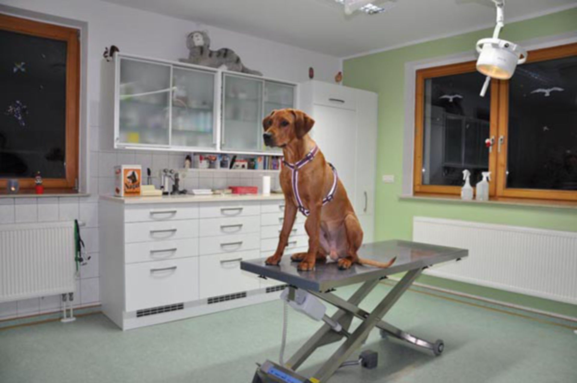 Veterinary Medicine: Treatment Room