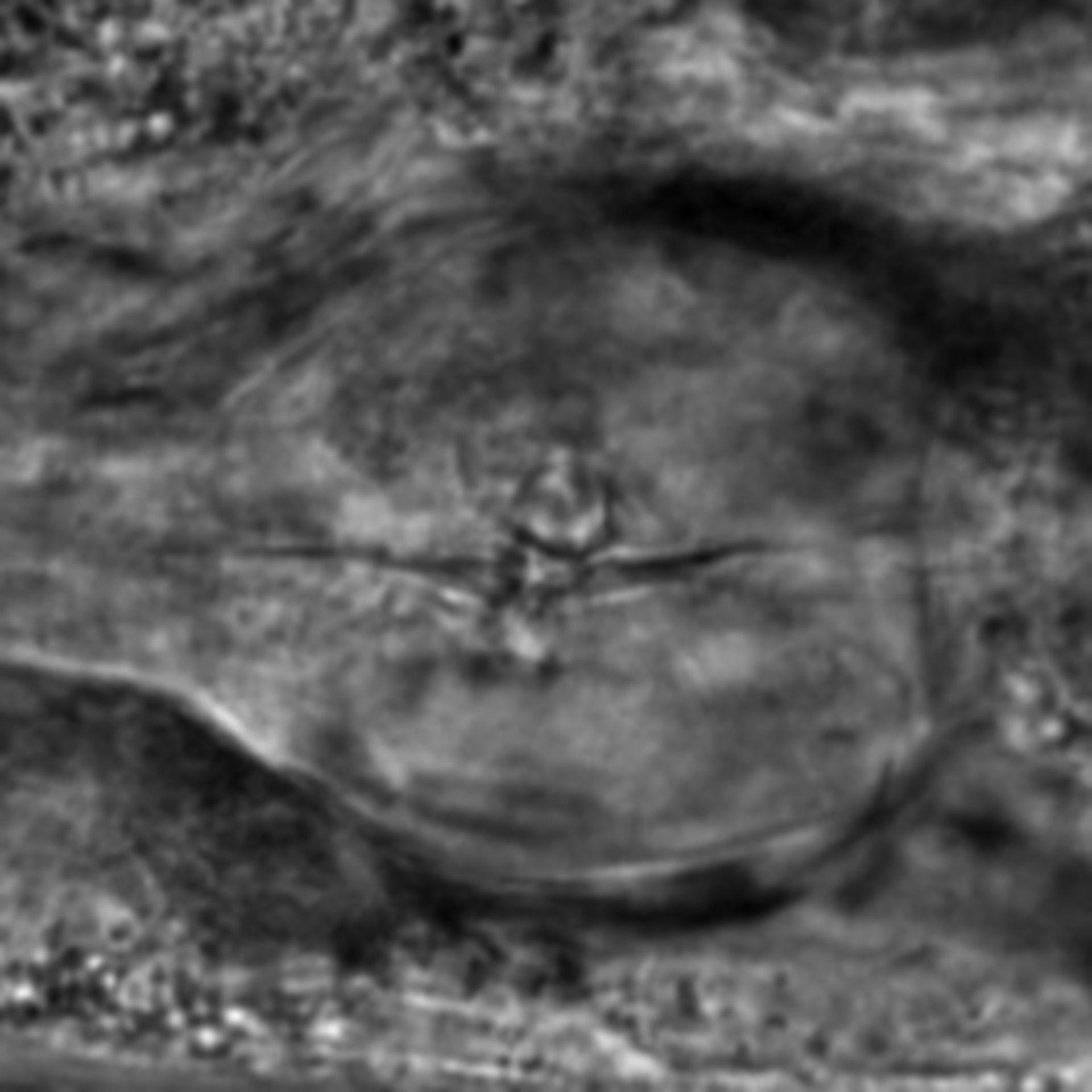 Caenorhabditis elegans - CIL:2803