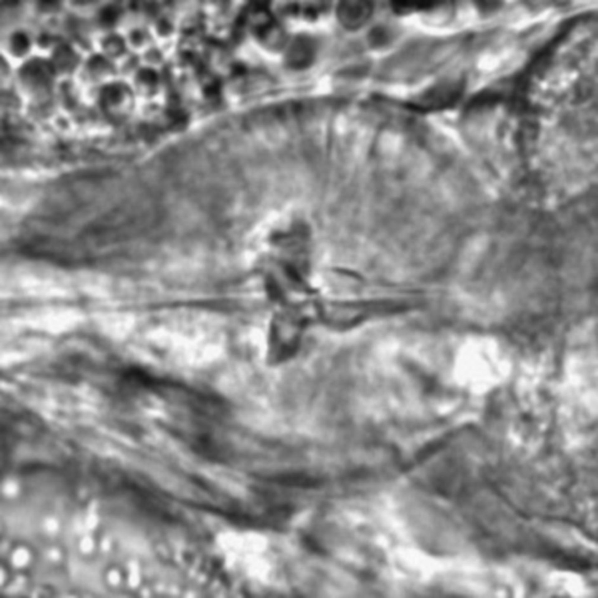 Caenorhabditis elegans - CIL:1769