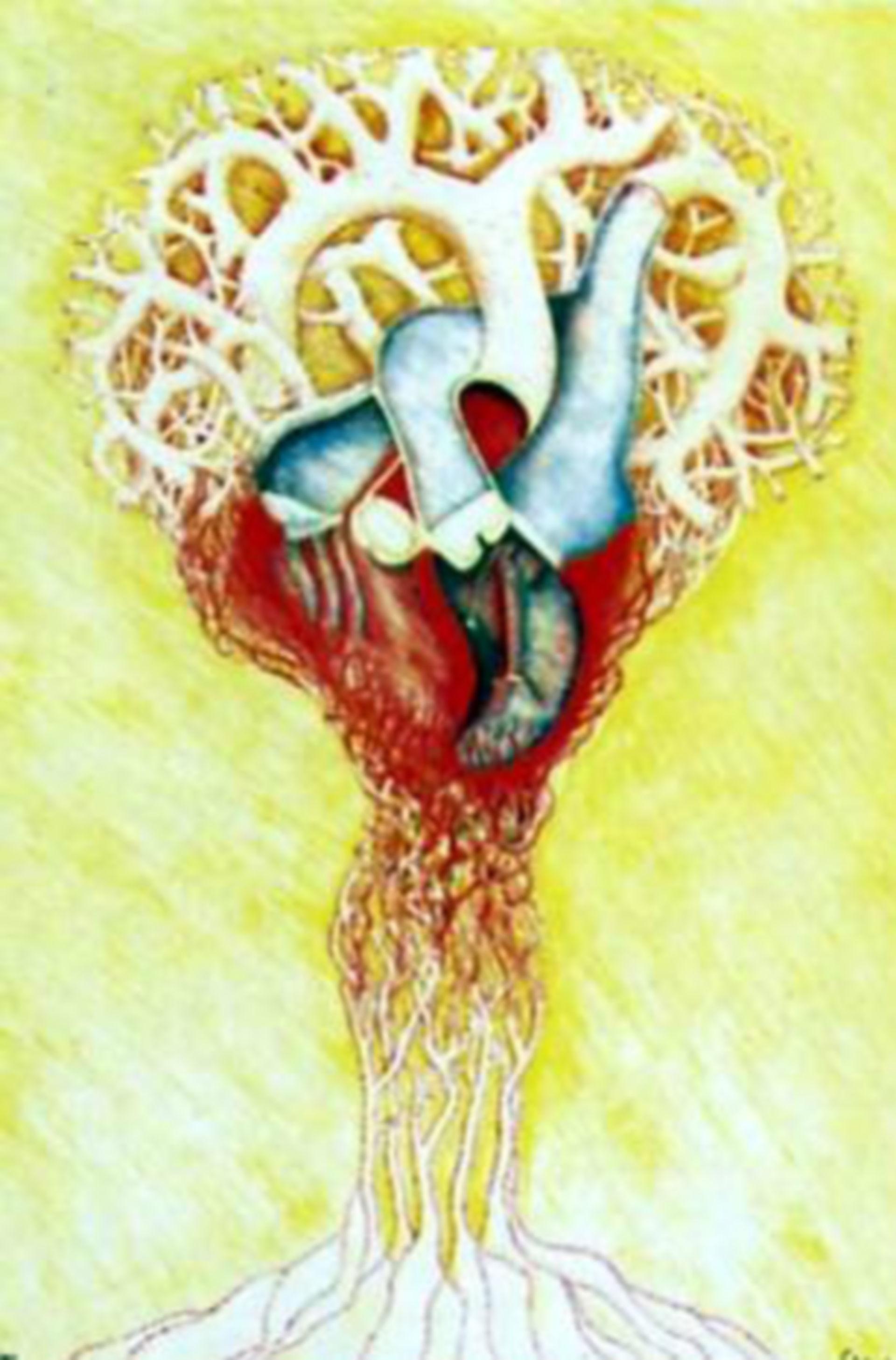 Unità funzionale del cuore 3