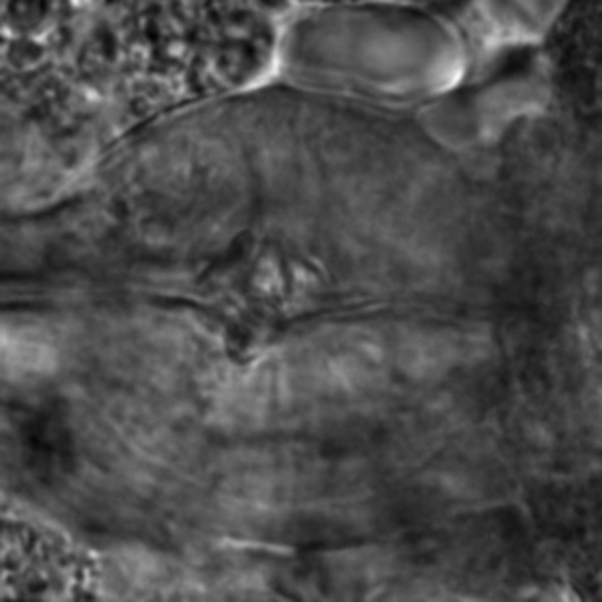 Caenorhabditis elegans - CIL:1966