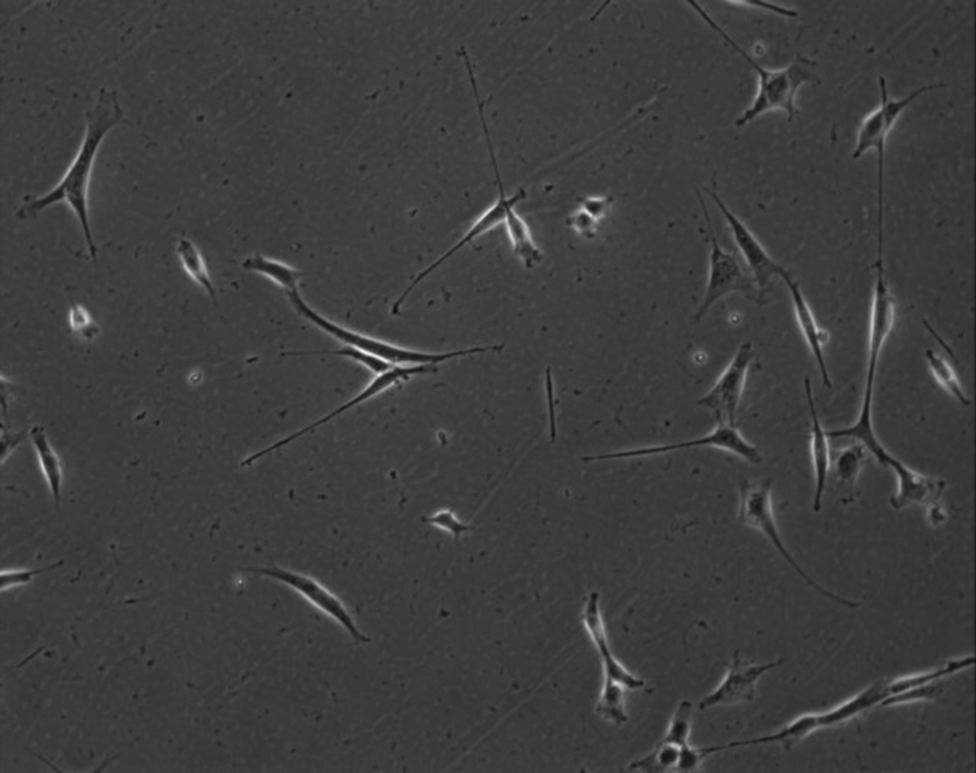 Mus musculus (Extracellular matrix part) - CIL:7843