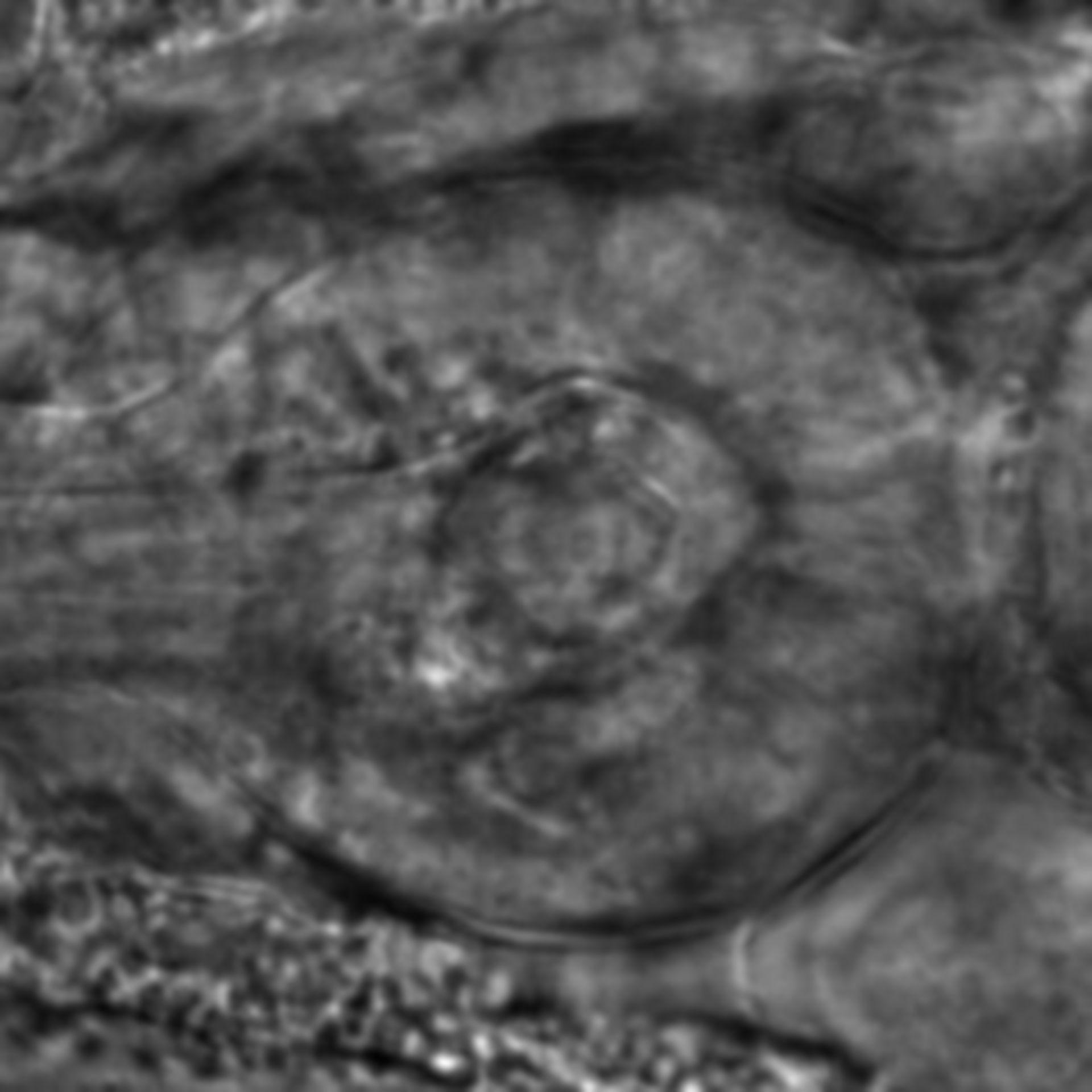 Caenorhabditis elegans - CIL:2199